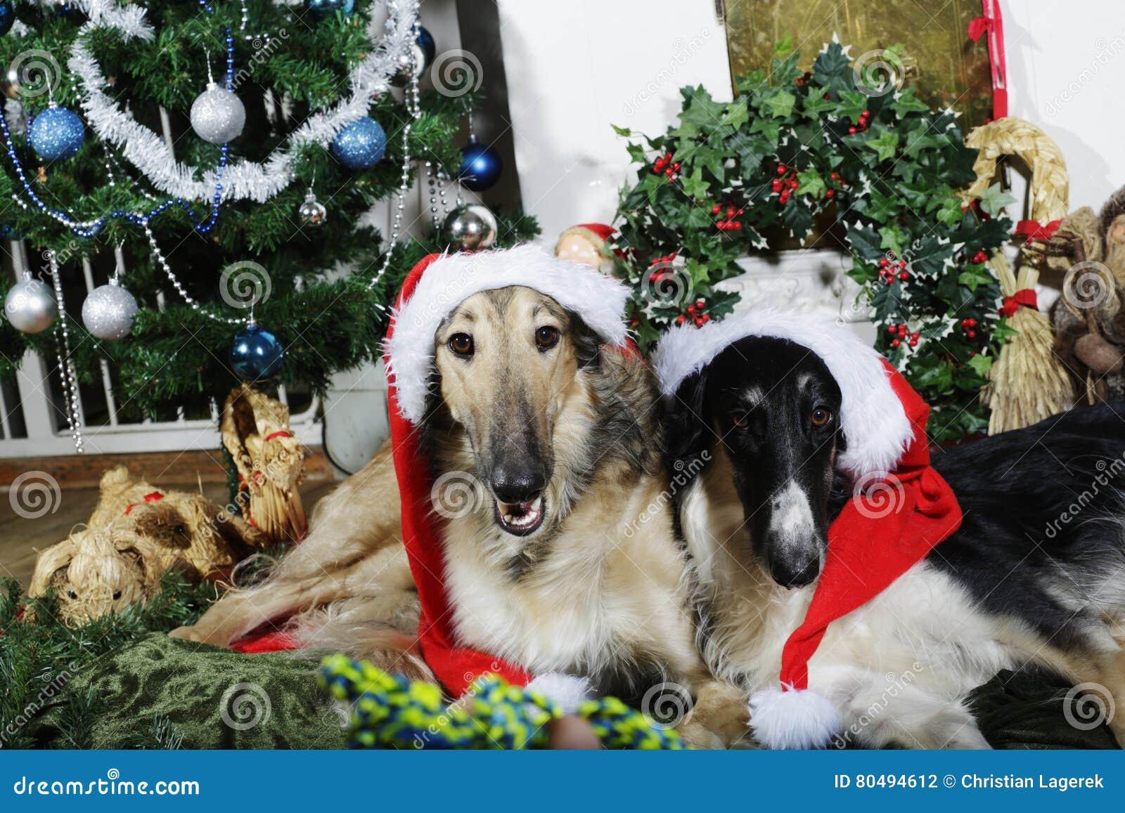 Cães com cumprimentos do Natal