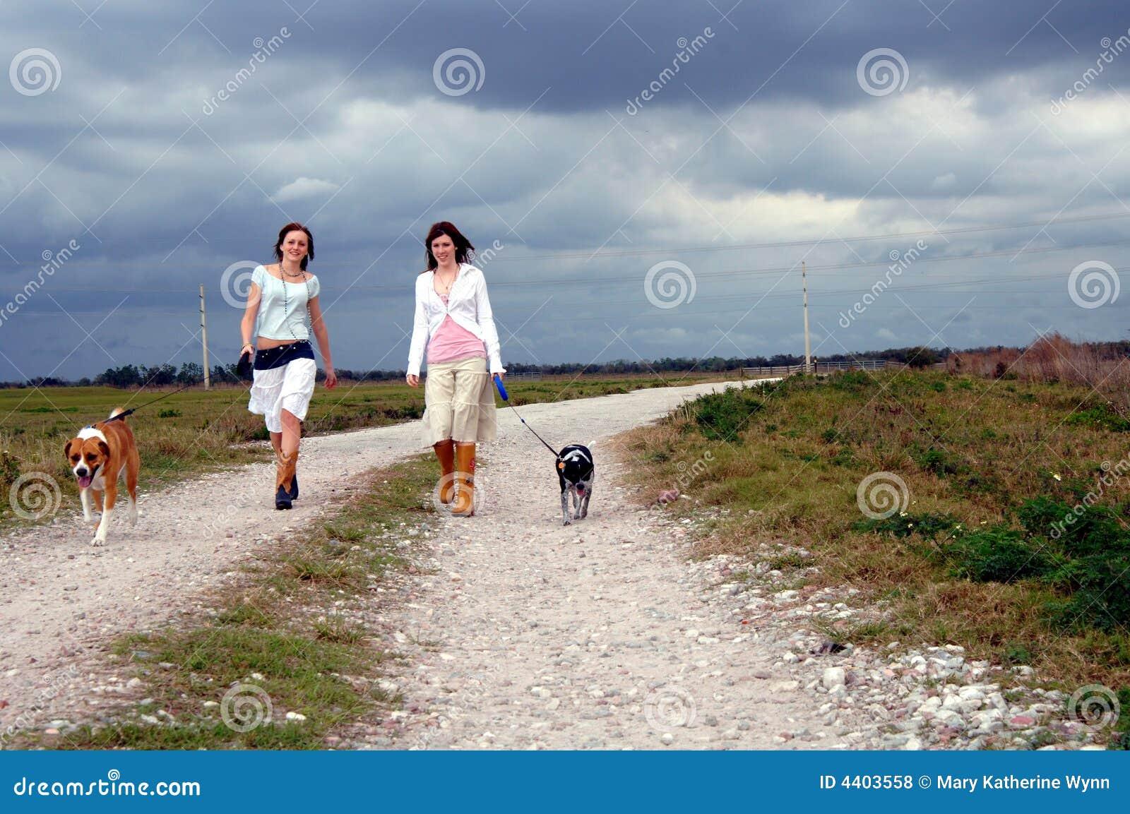 Cães de passeio na estrada secundária