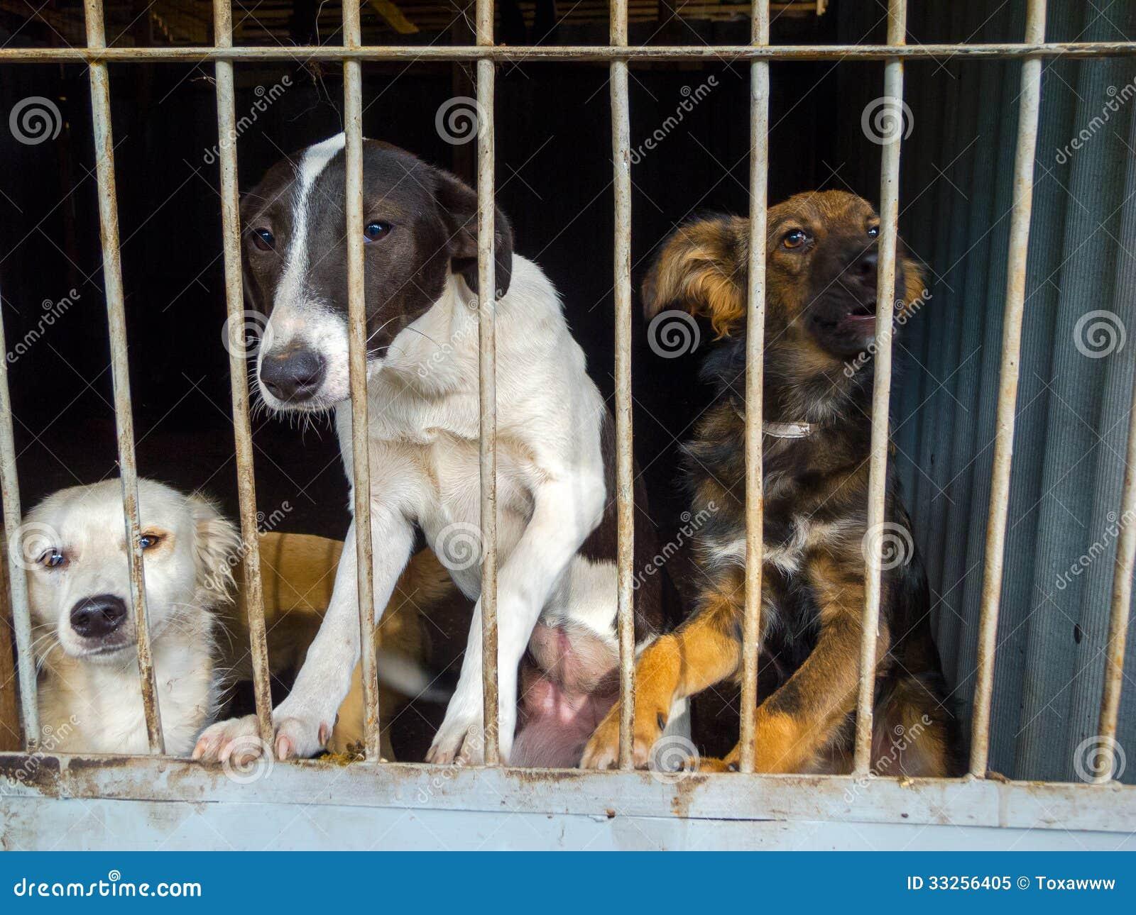 Cães dispersos