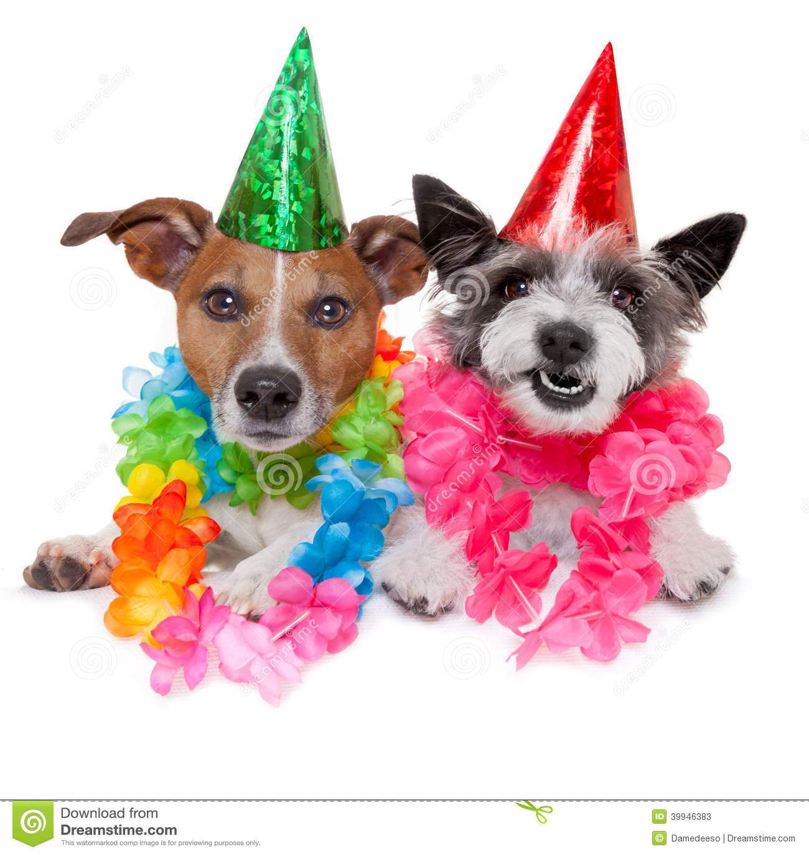 Cães do aniversário