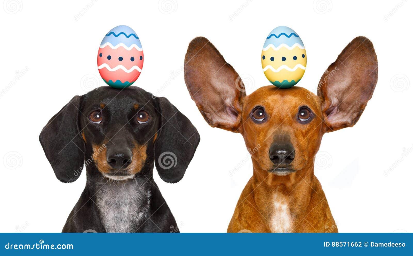 Cães do coelhinho da Páscoa com ovo