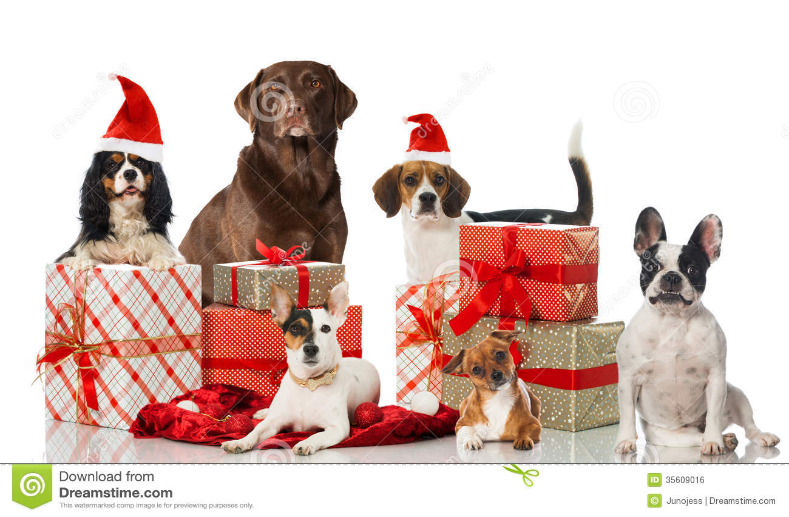 Cães do Natal
