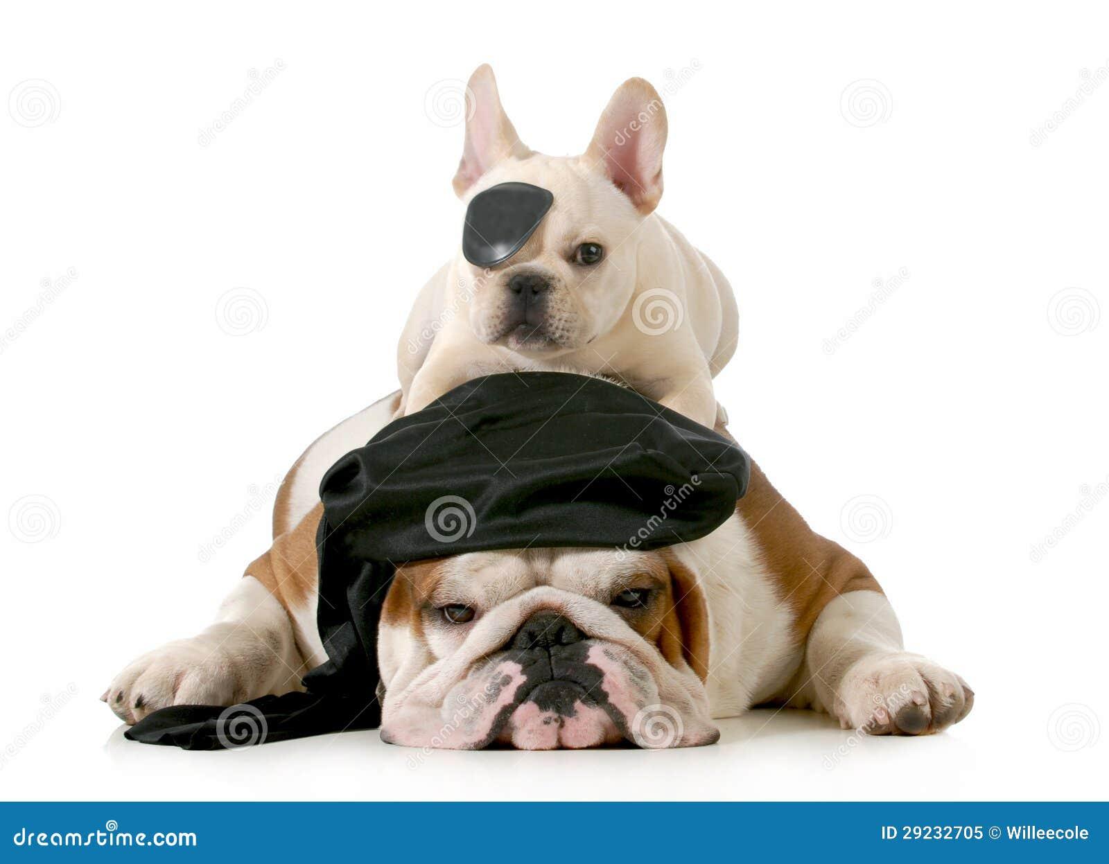 Download Cães do pirata imagem de stock. Imagem de preto, pirata - 29232705