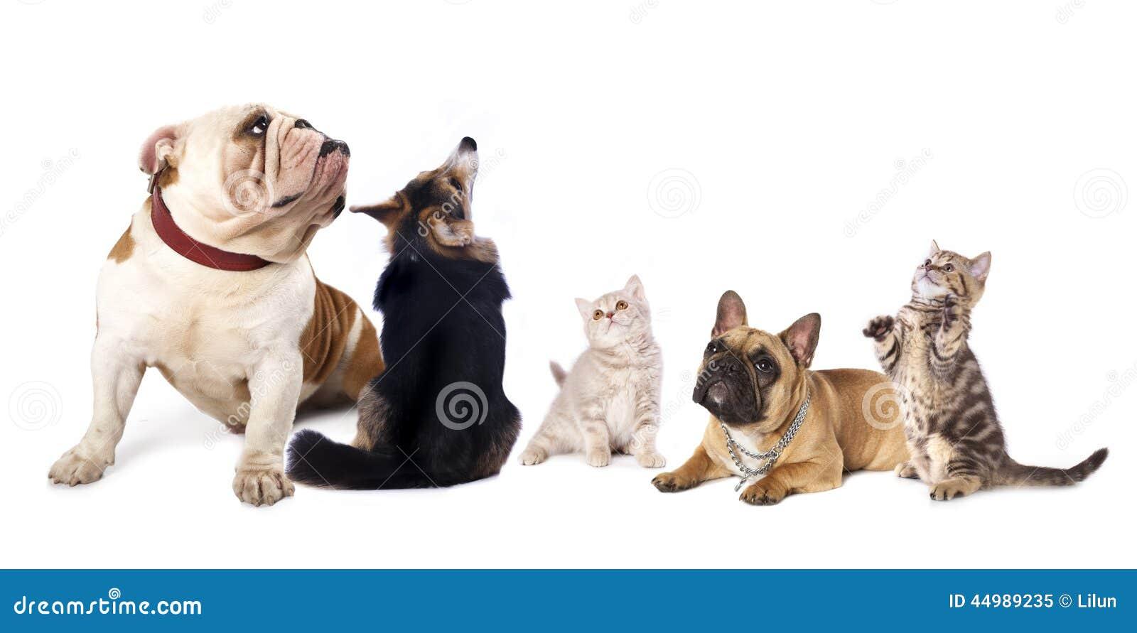 Cães e gato