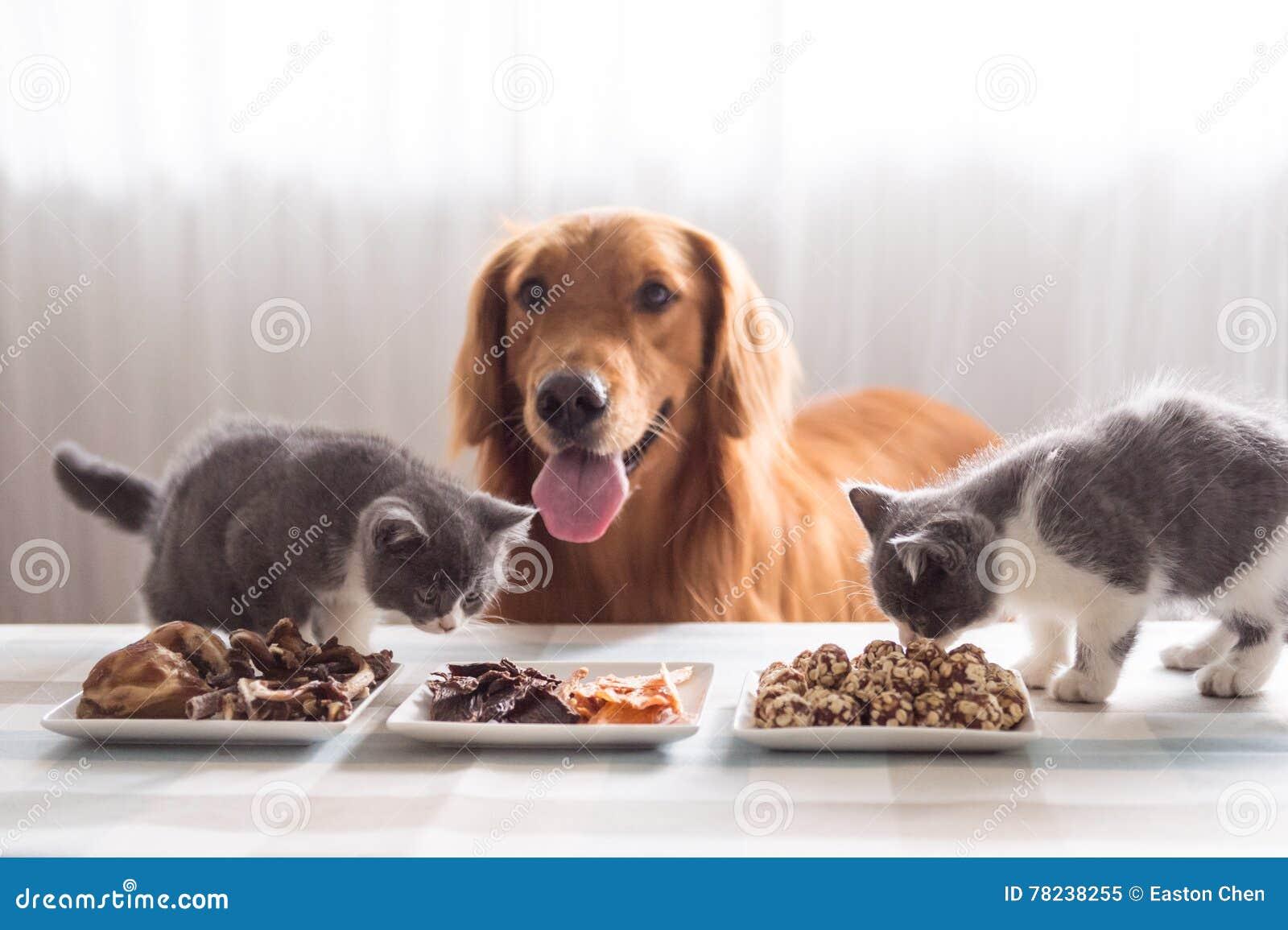 Cães e gato e alimento
