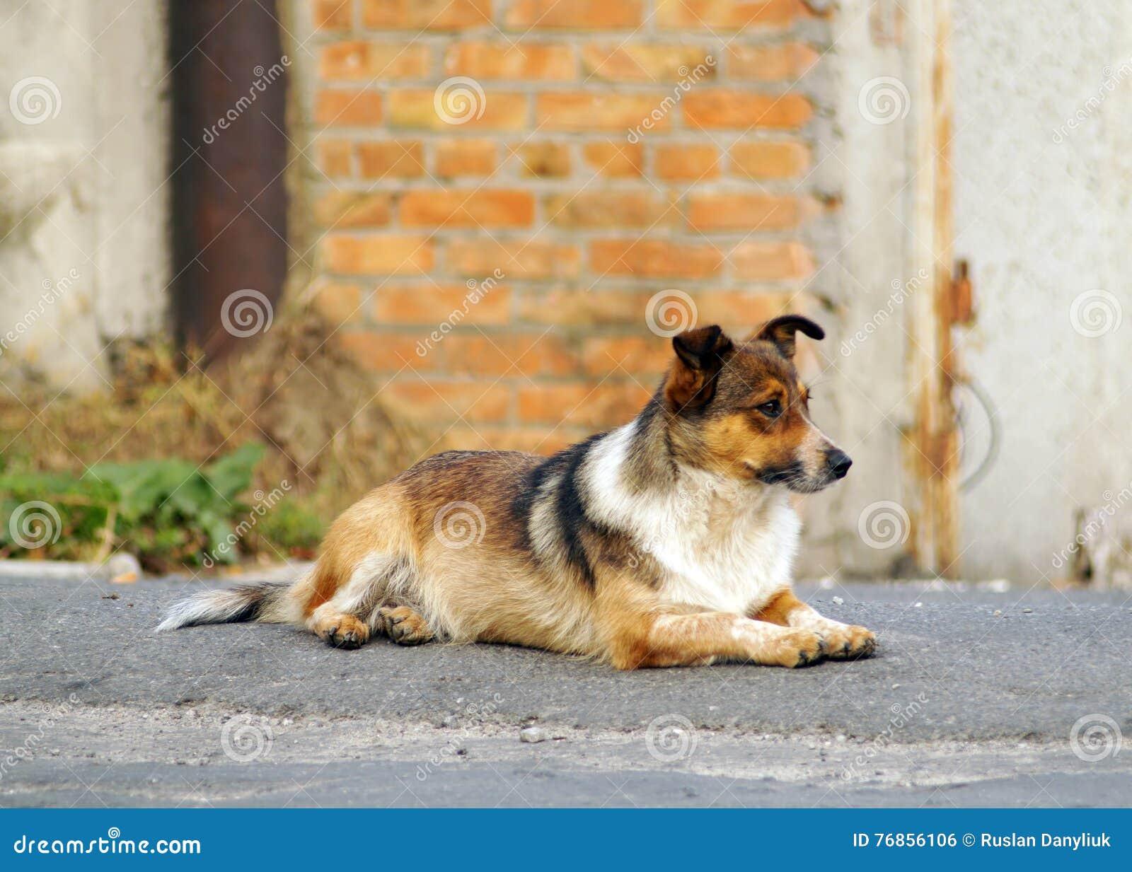 Cão bonito do ruivo pequeno na rua