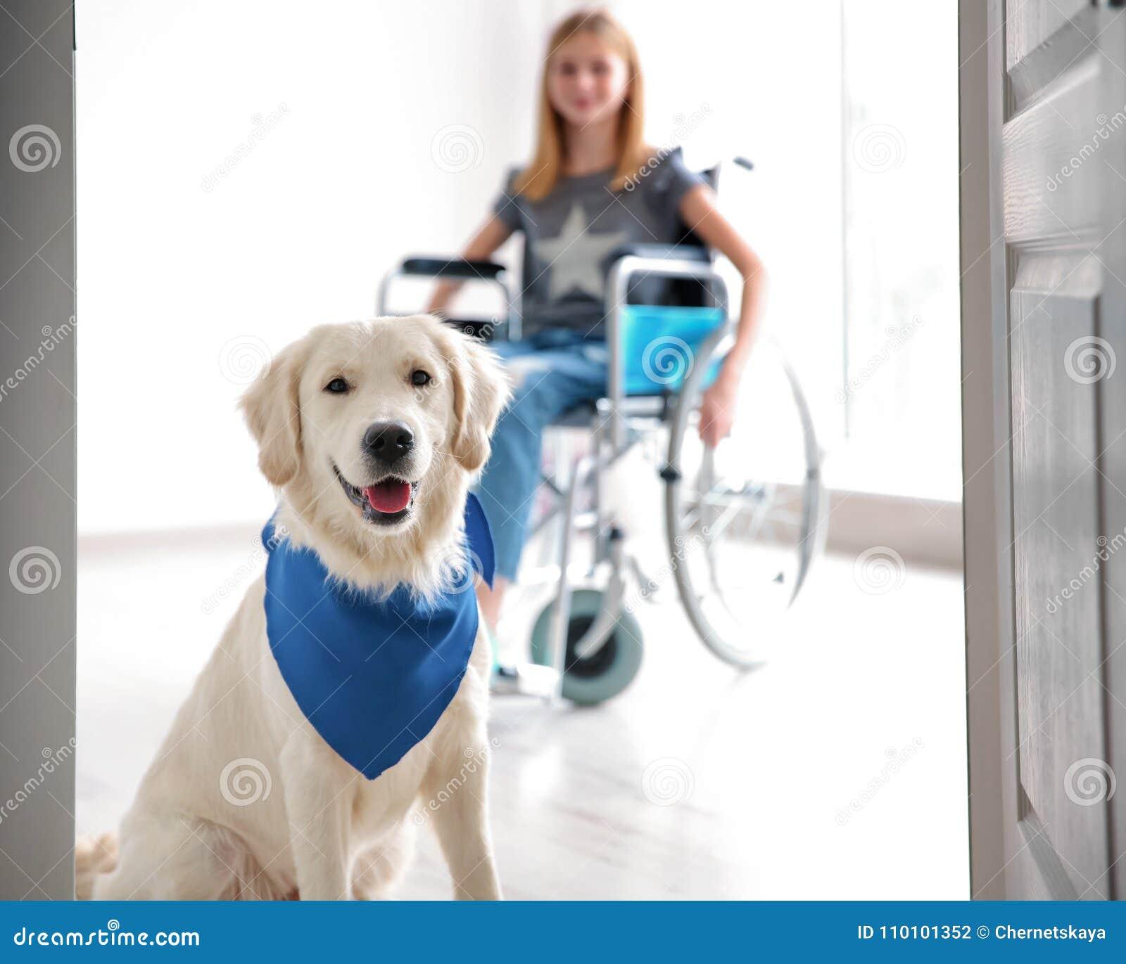 Cão bonito do serviço e menina borrada na cadeira de rodas
