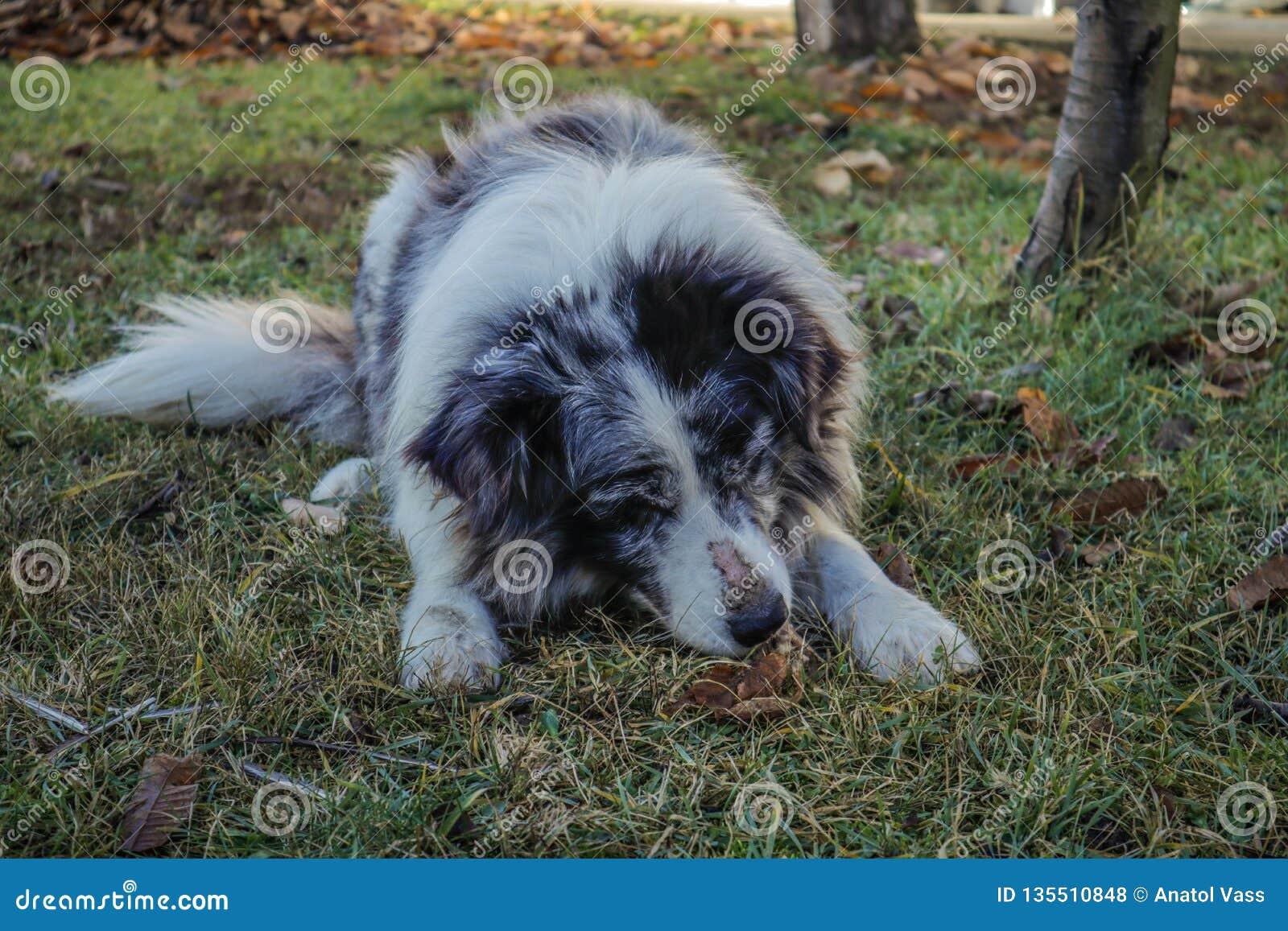 Cão bonito que come o osso