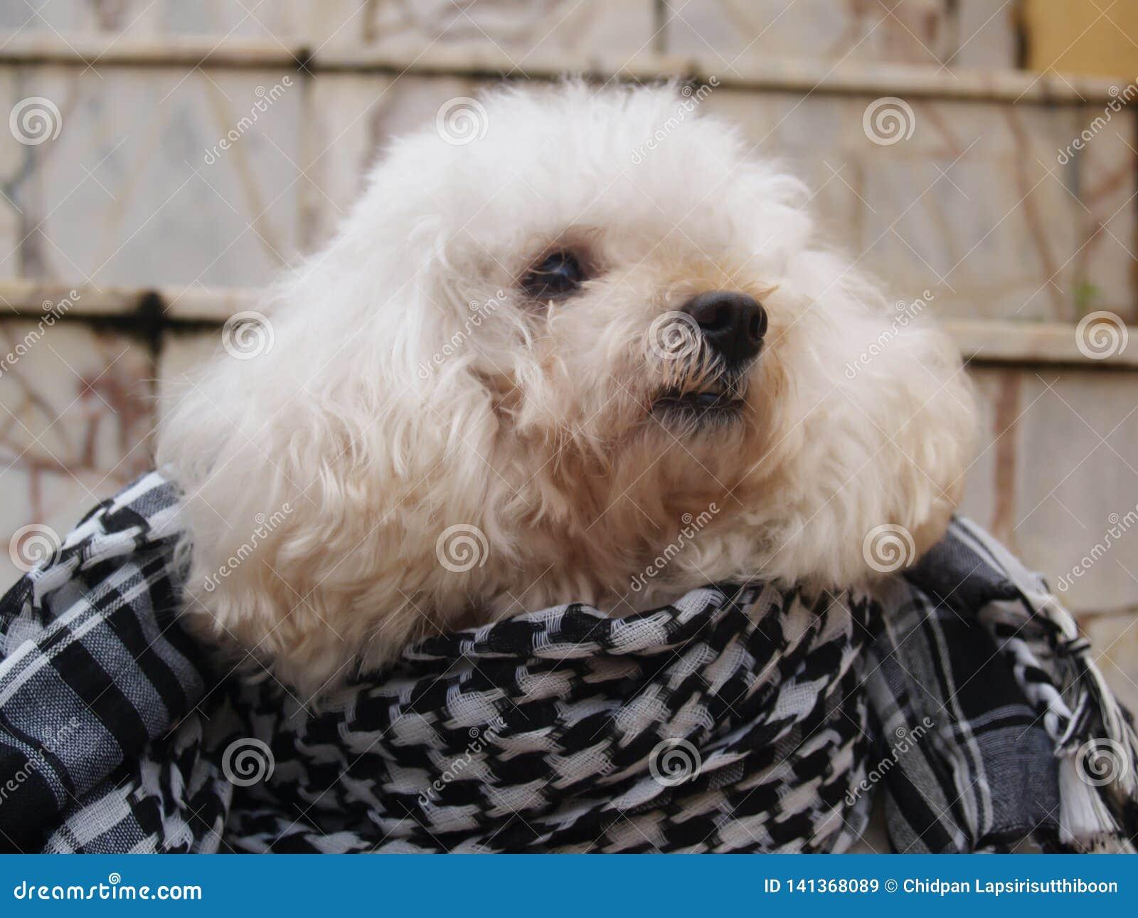 Cão branco em um assoalho do granito