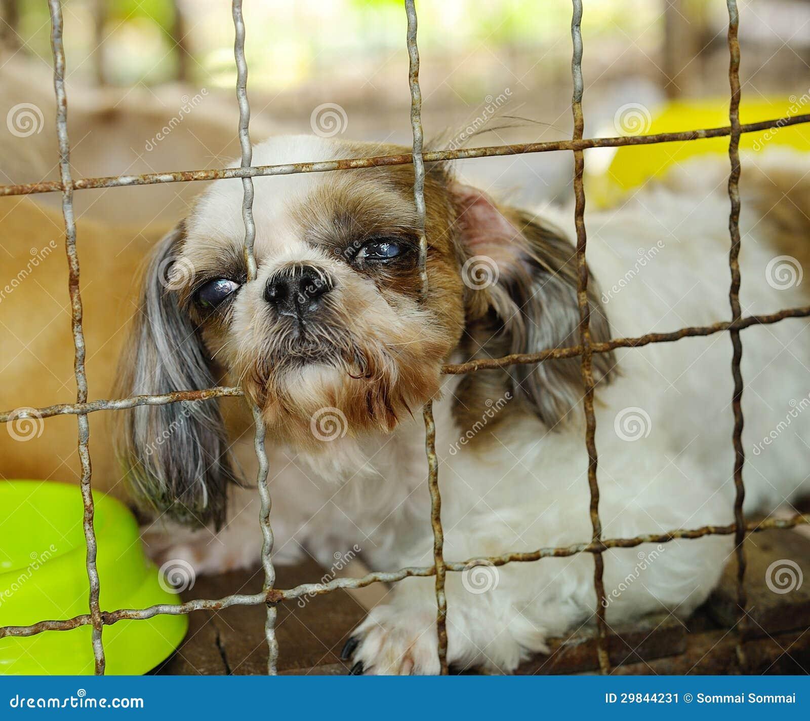 Close up de uma gaiola do cão