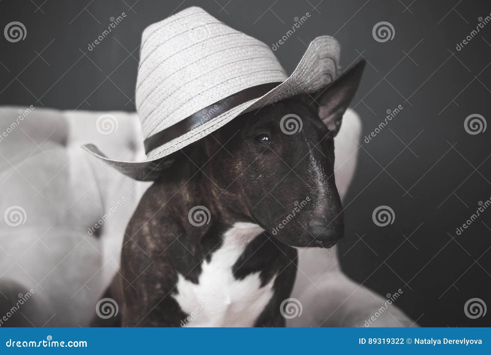 Cão, chapéu