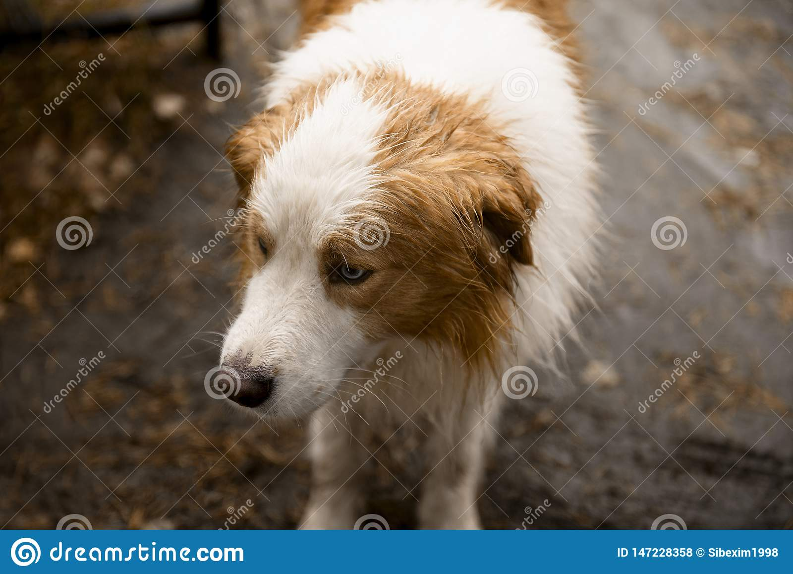Cão com close-up vermelho dos pontos