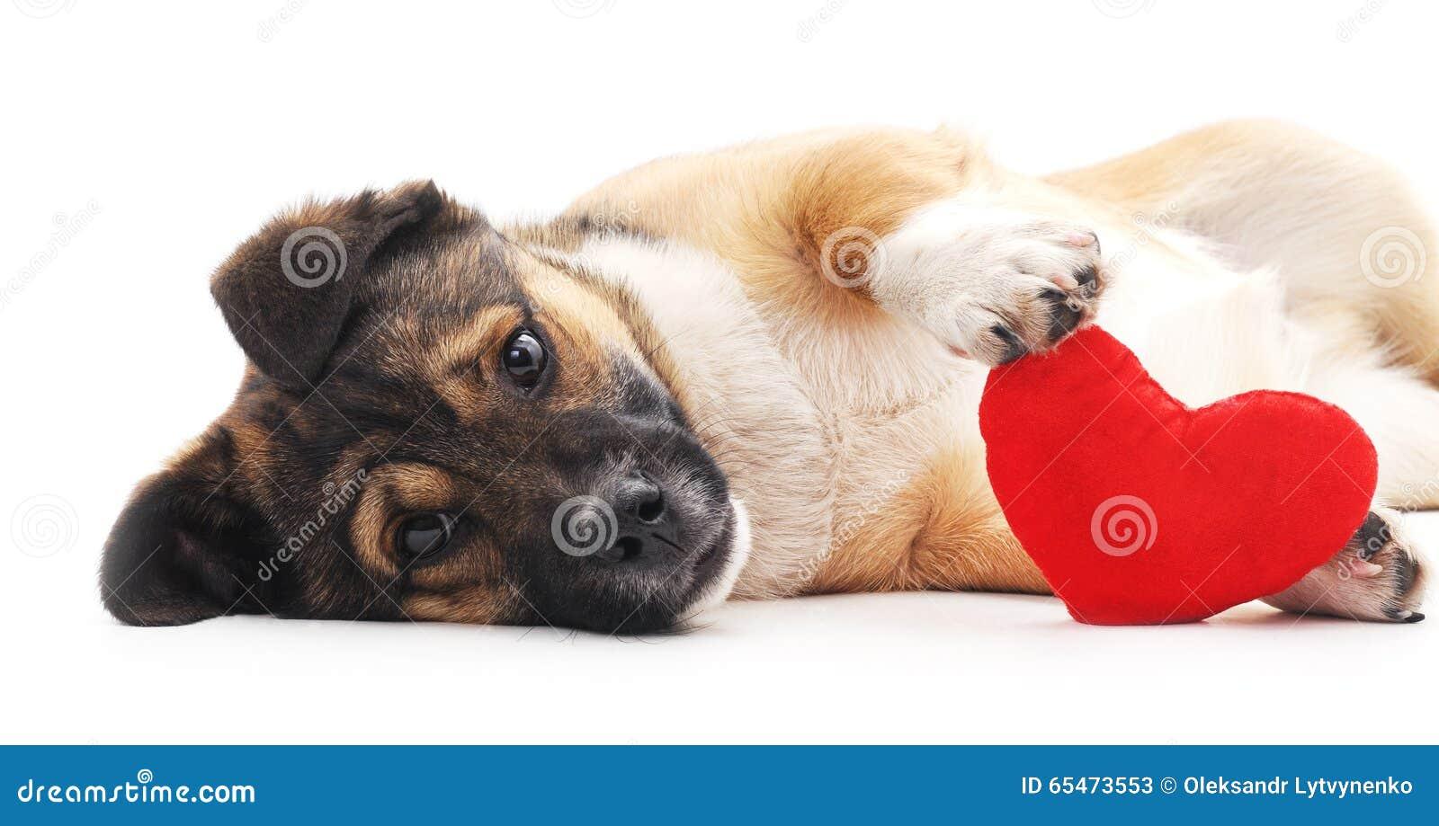 Cão com coração