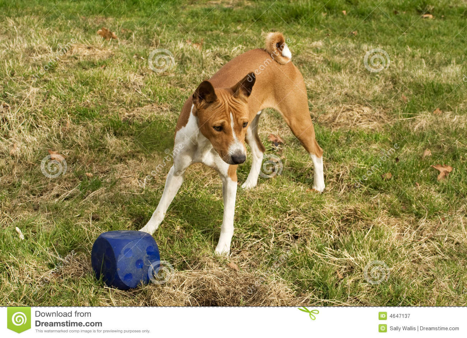 Cão com cubo