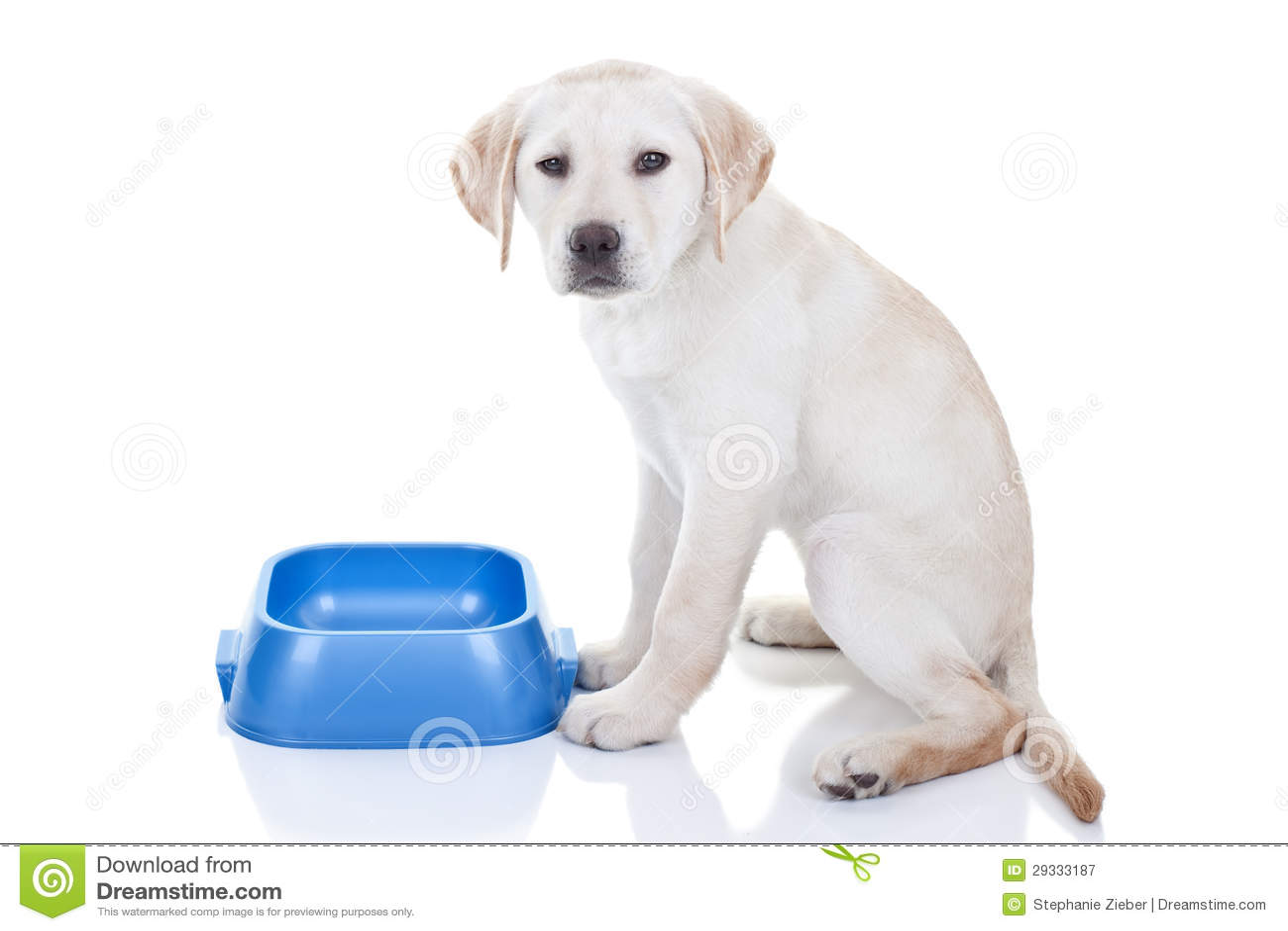 Cão com fome engraçado