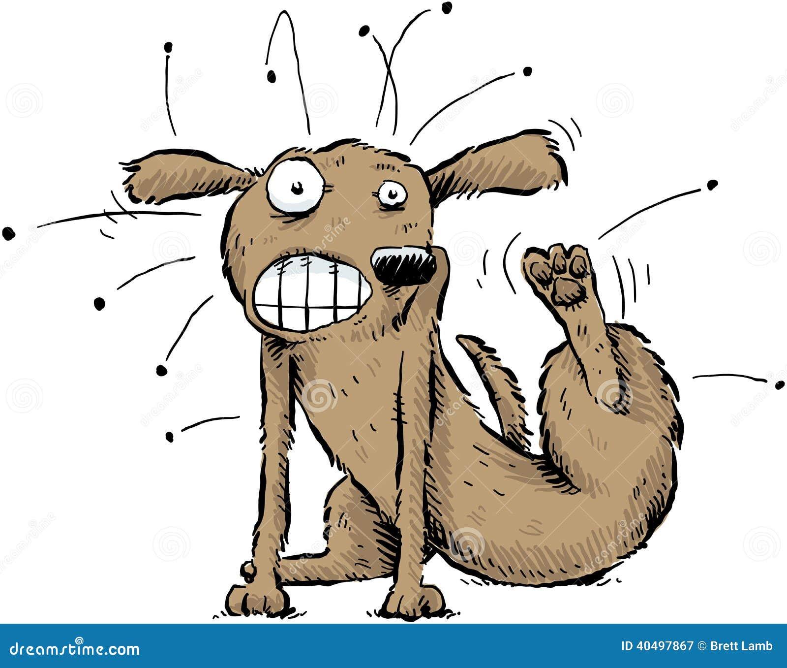 Cão com pulga