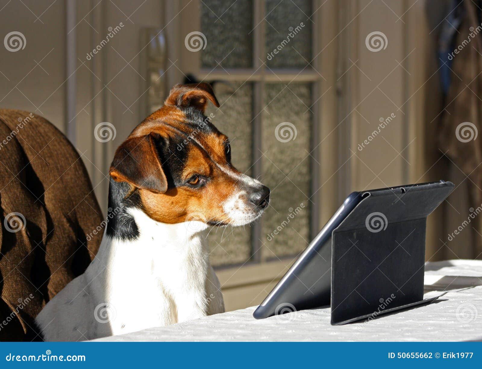 Cão com tabuleta