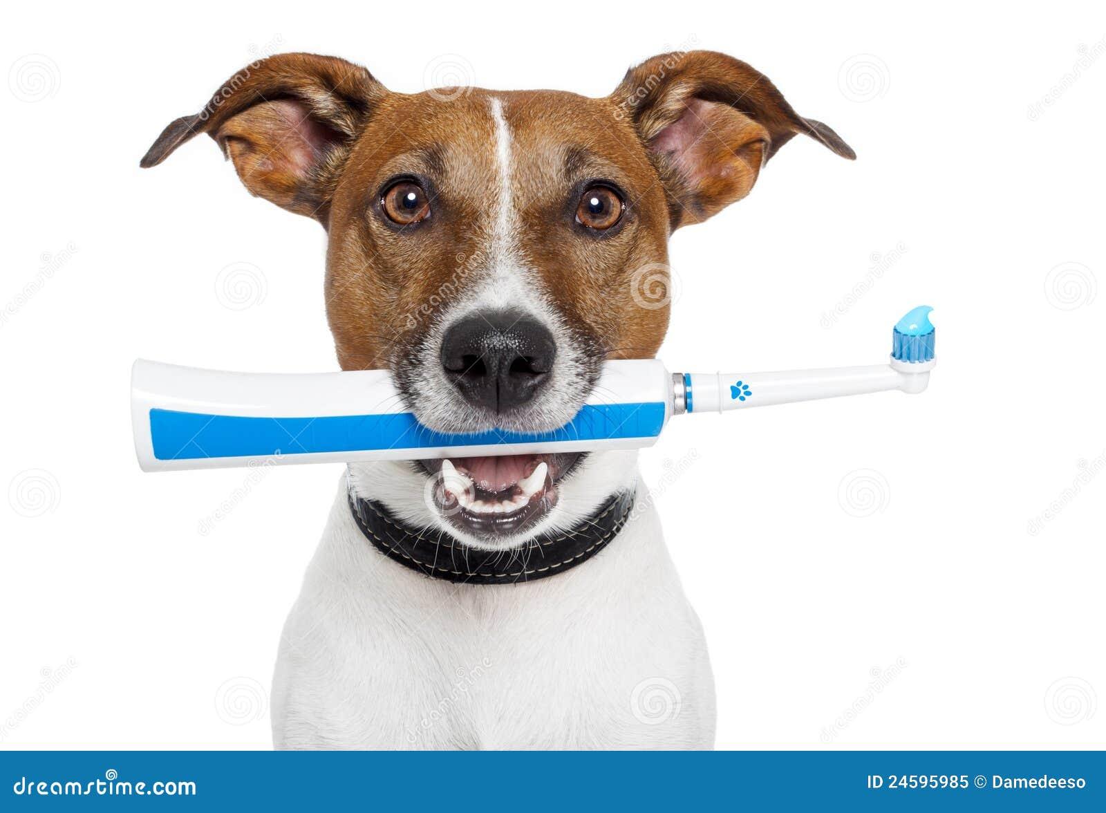 Cão com toothbrush elétrico
