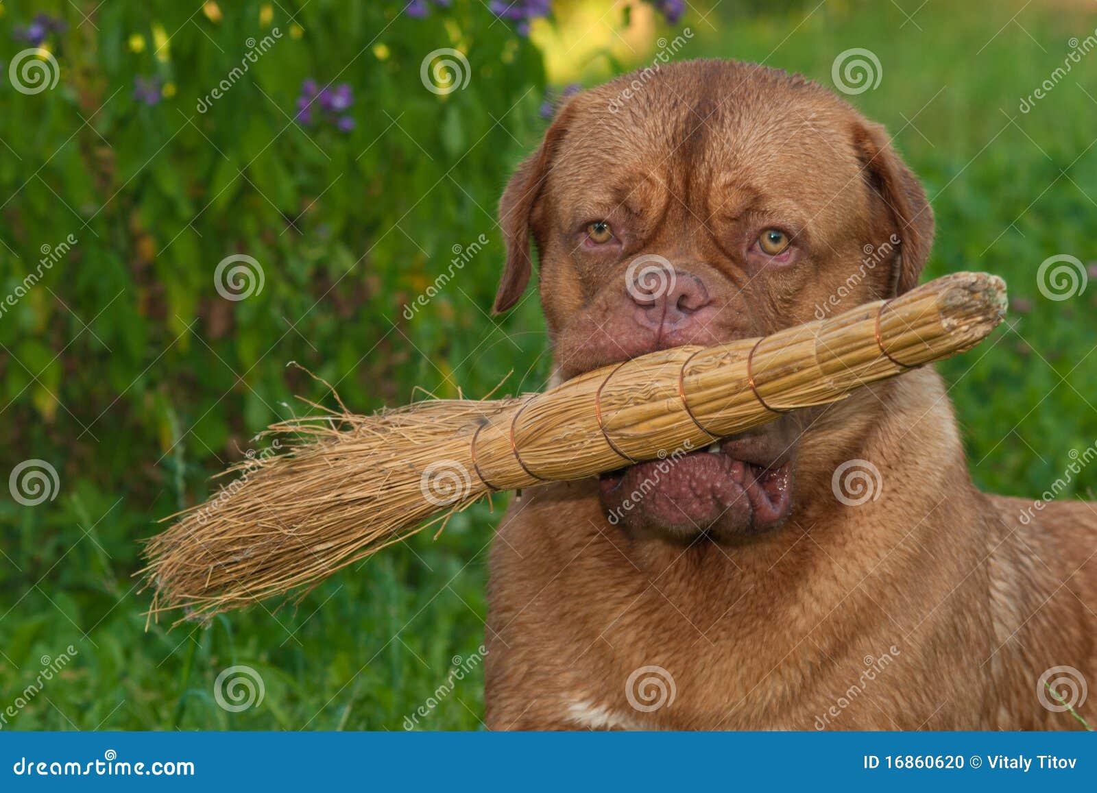 Cão com uma vassoura