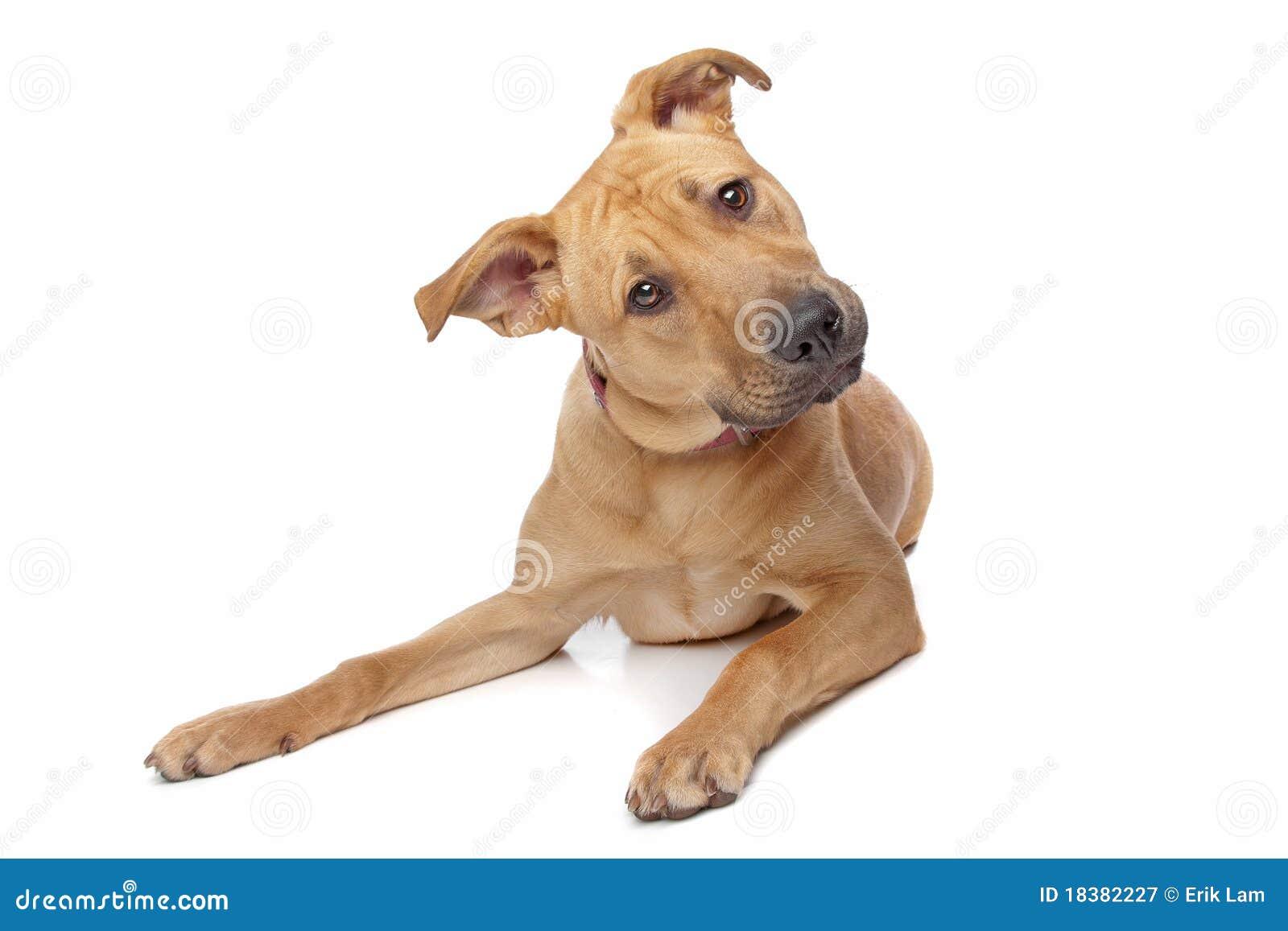 Cão confuso