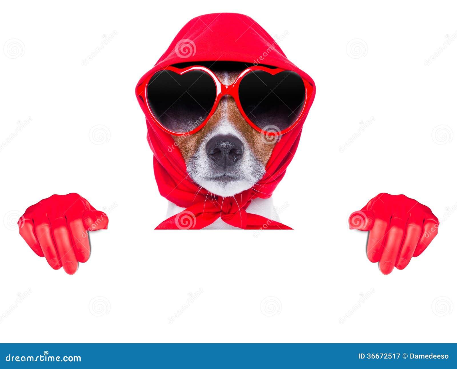Cão da dona de casa da senhora