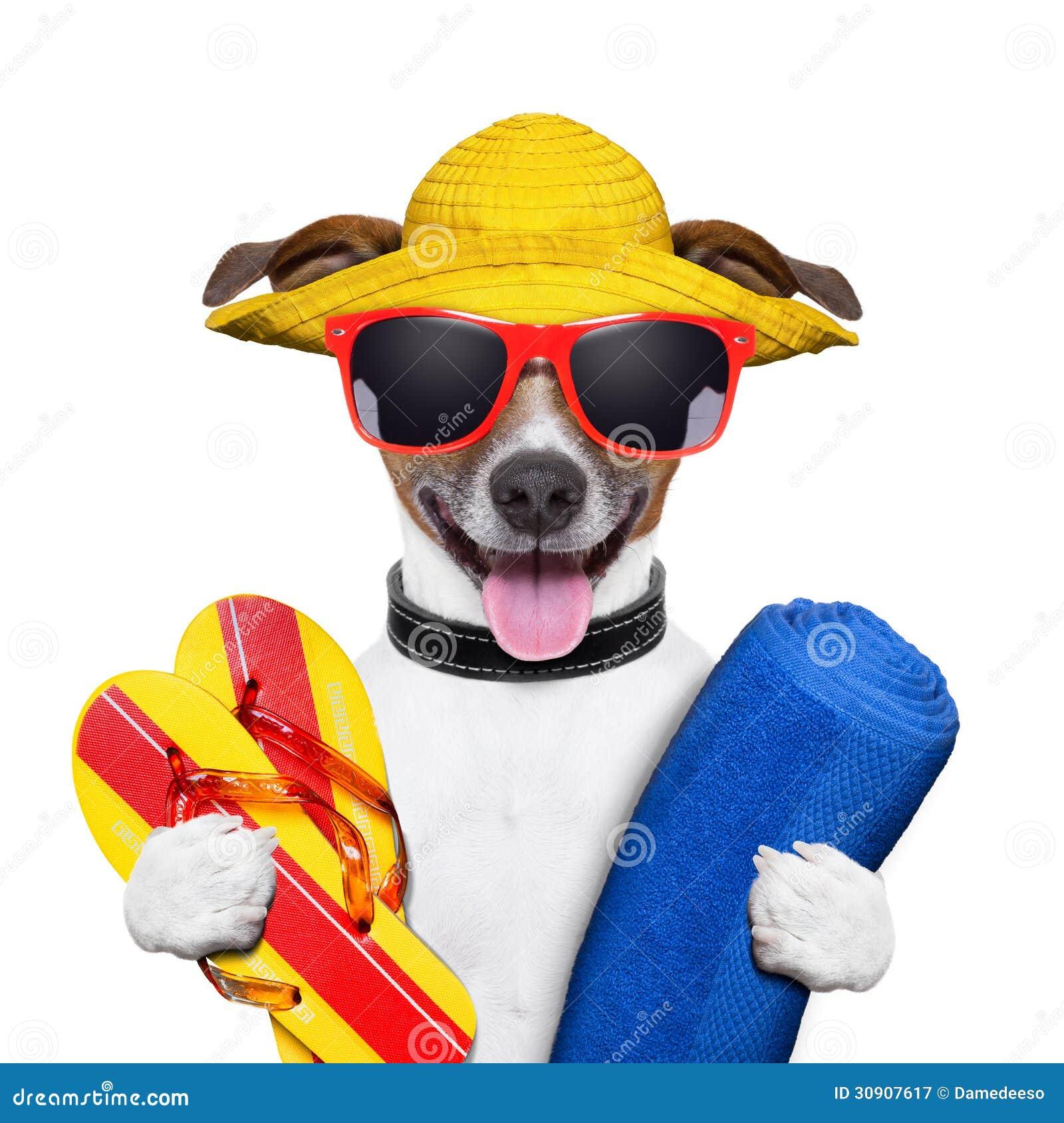 Cão da praia do verão