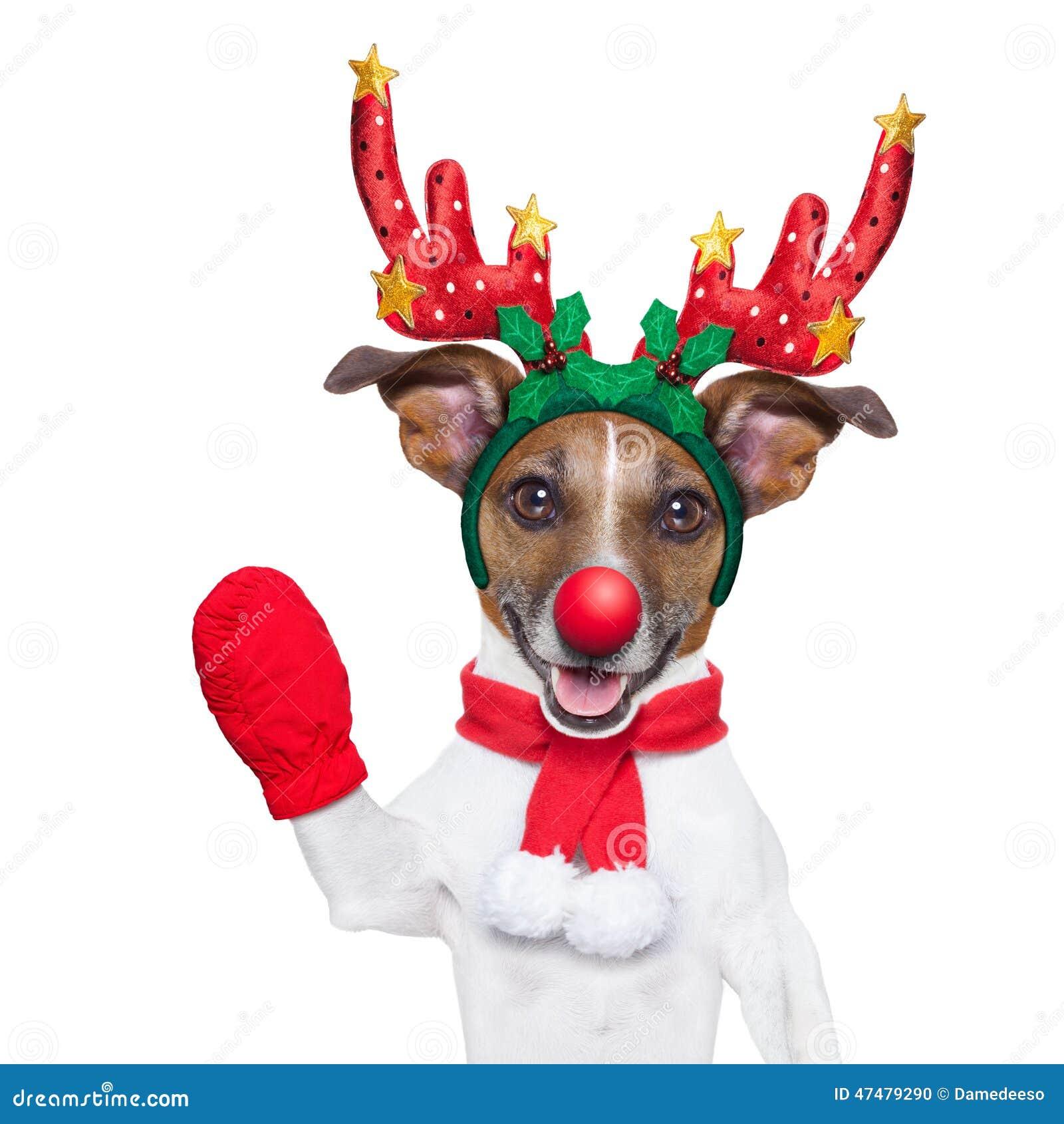 Cão da rena