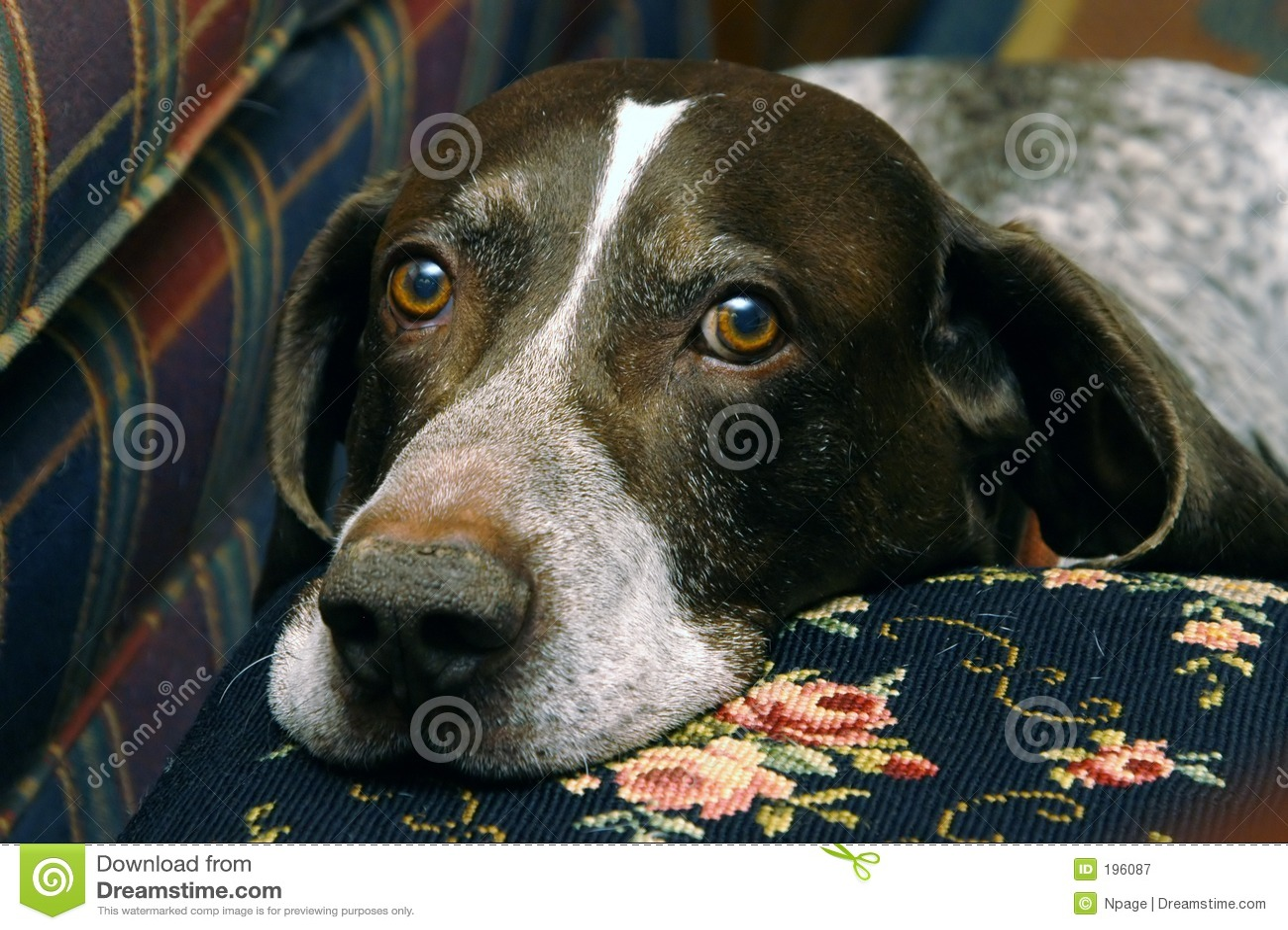 Cão de caça II