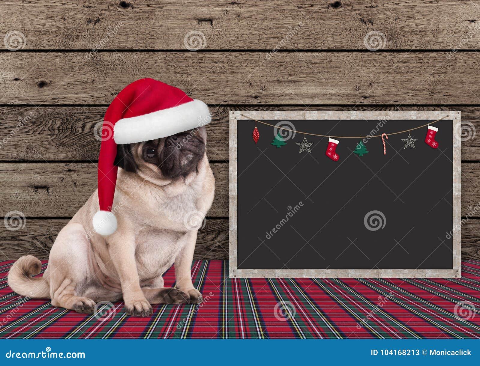 Cão de cachorrinho bonito do pug do Natal com chapéu e quadro-negro de Santa no fundo de madeira