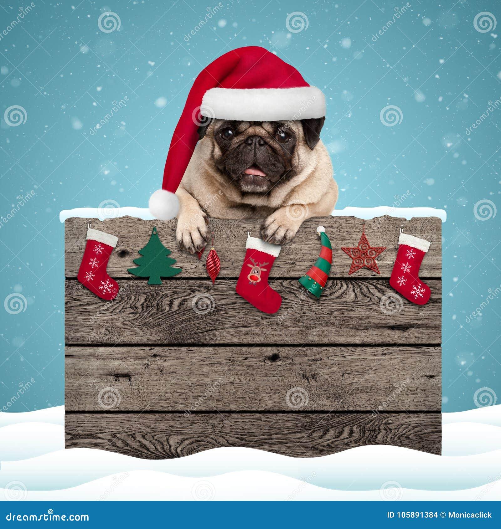 Cão de cachorrinho bonito do pug que veste o chapéu de Santa que pendura com as patas no sinal de madeira resistido com decoração