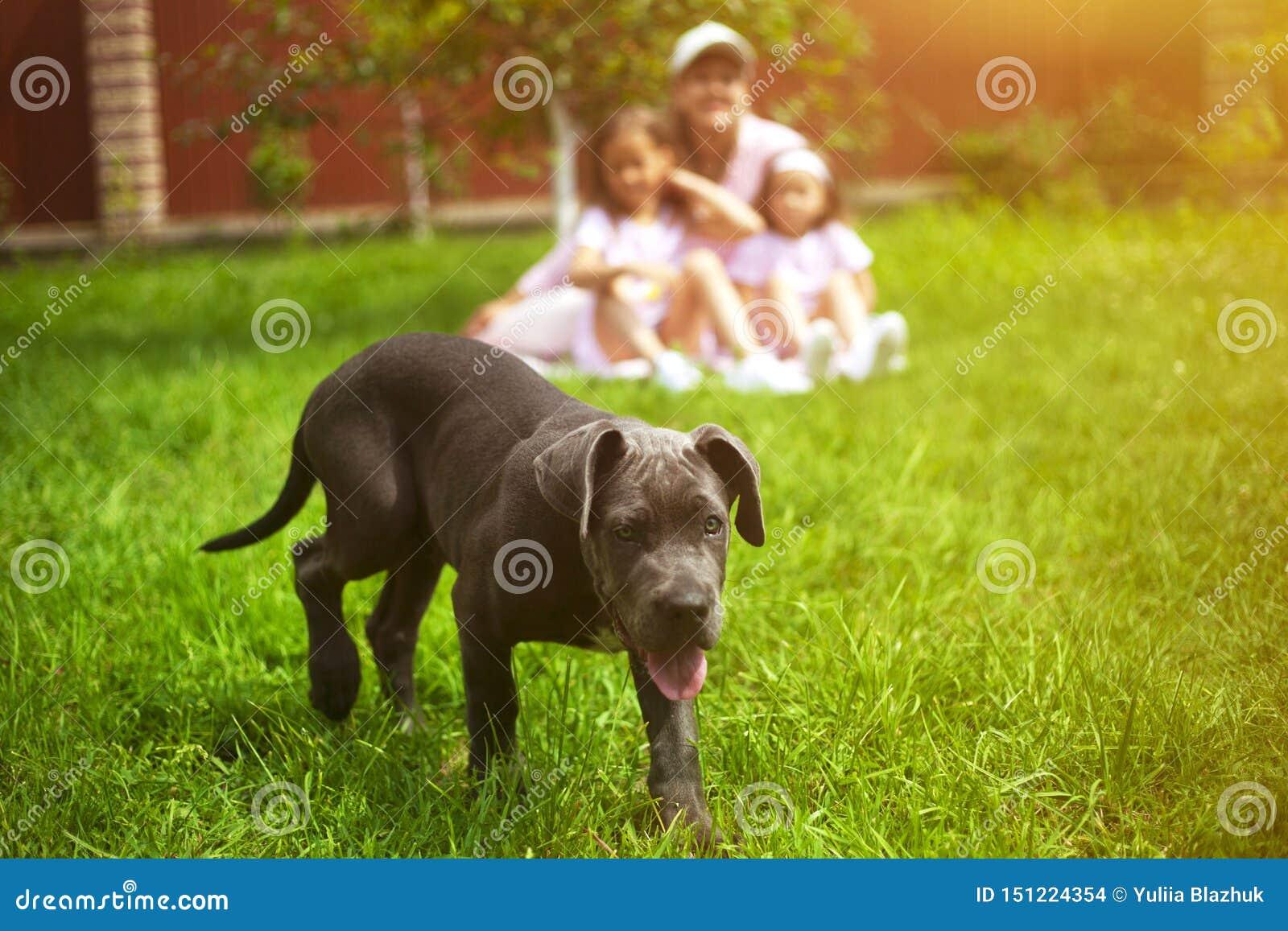 Cão de cachorrinho e família defocused com as crianças no verão no jardim verde