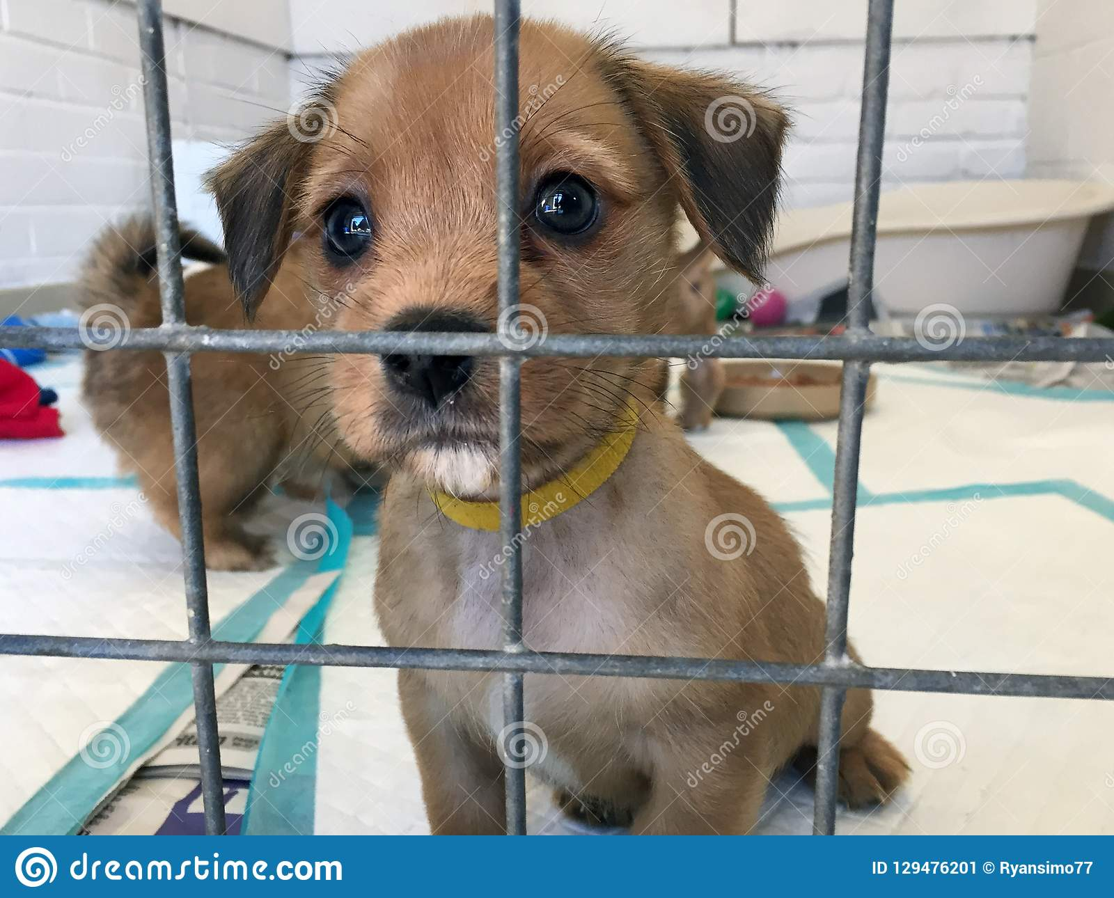 Cão de cachorrinho em um abrigo do salvamento em uma gaiola