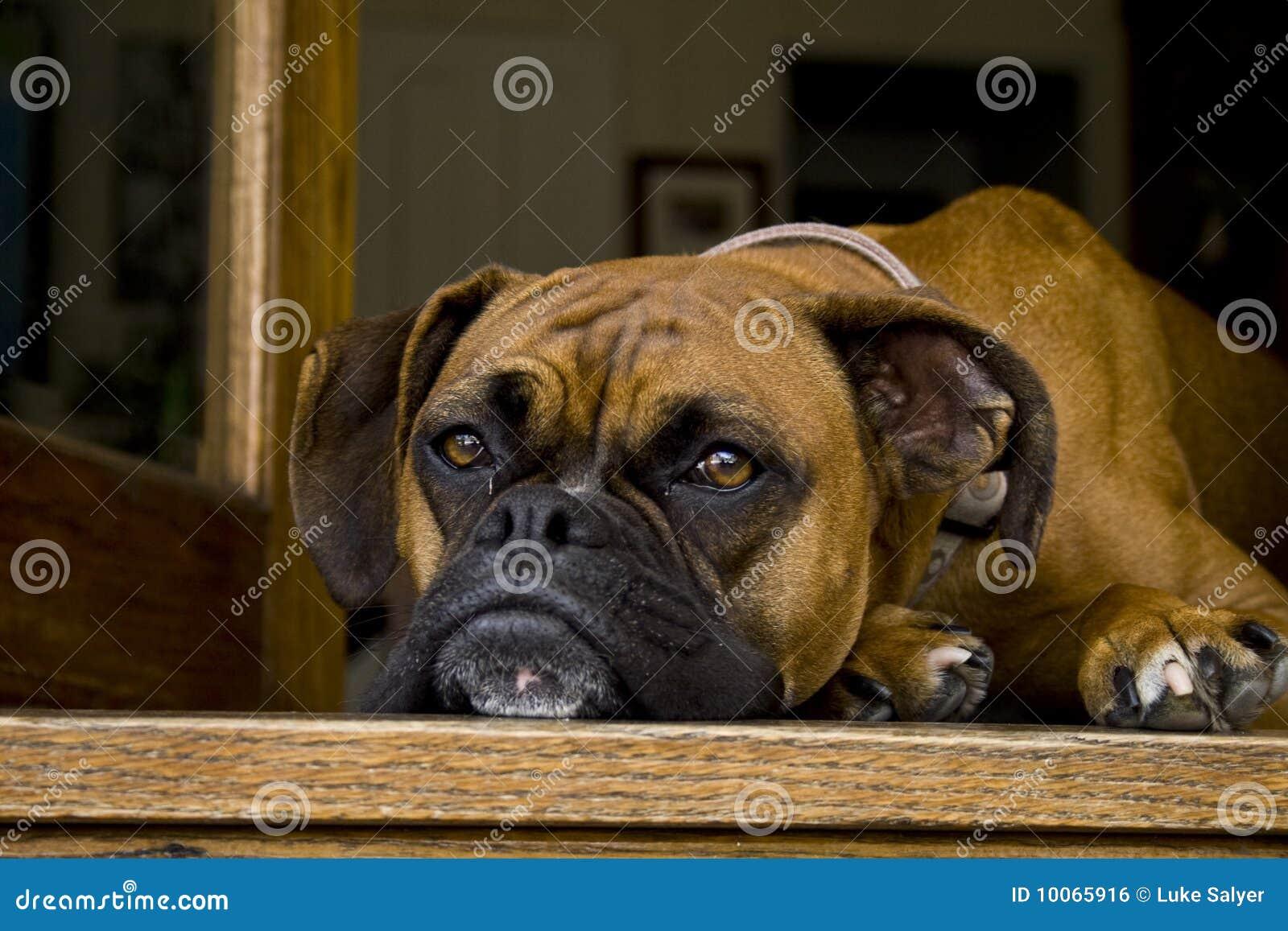Cão de descanso