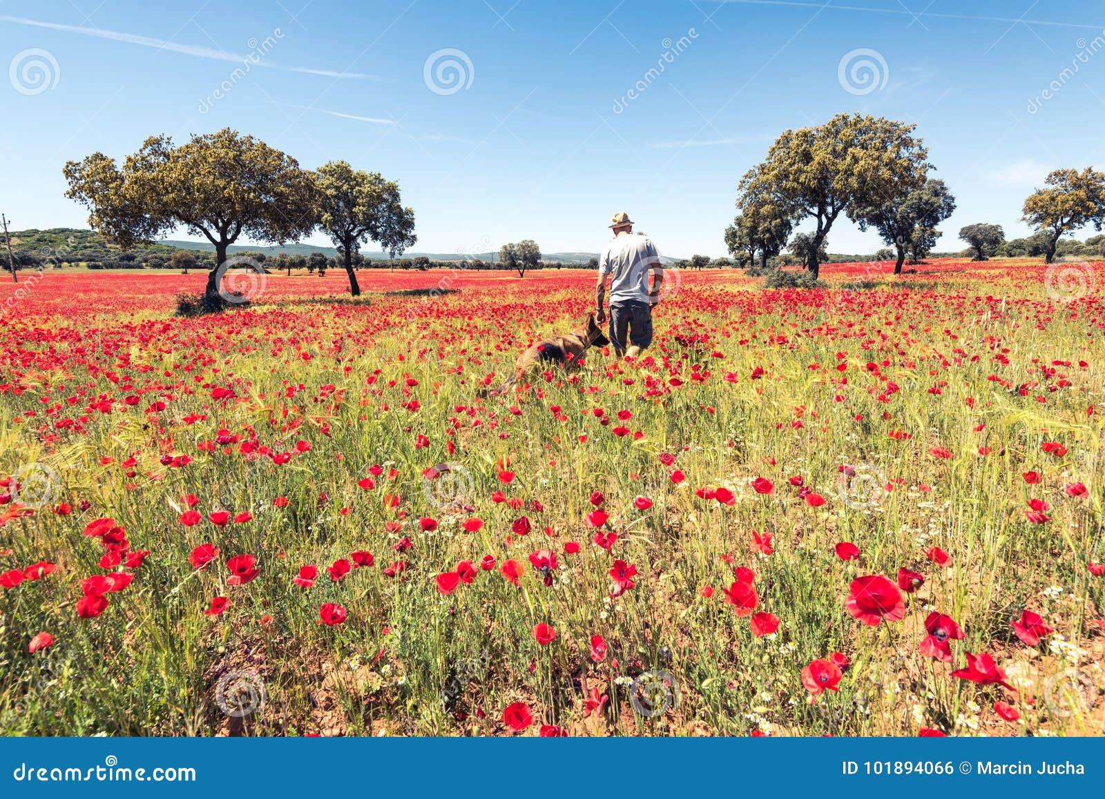 Cão de passeio do homem do desejo por viajar no prado selvagem