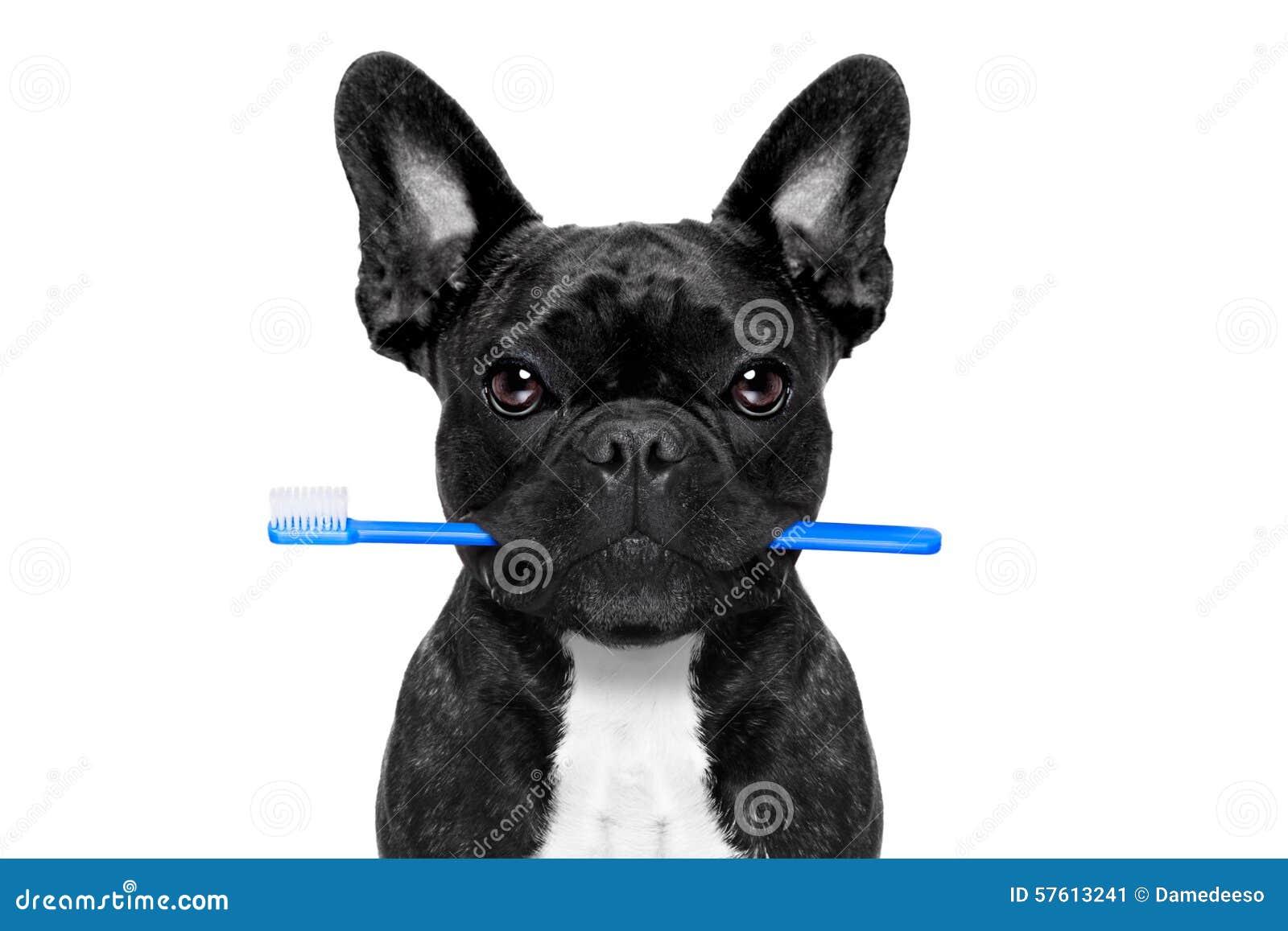 Cão dental da escova de dentes