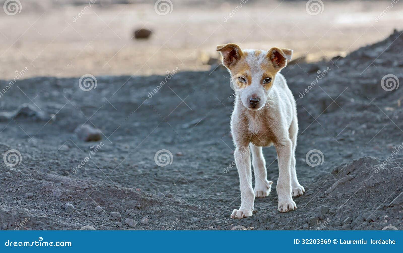 Cão desabrigado