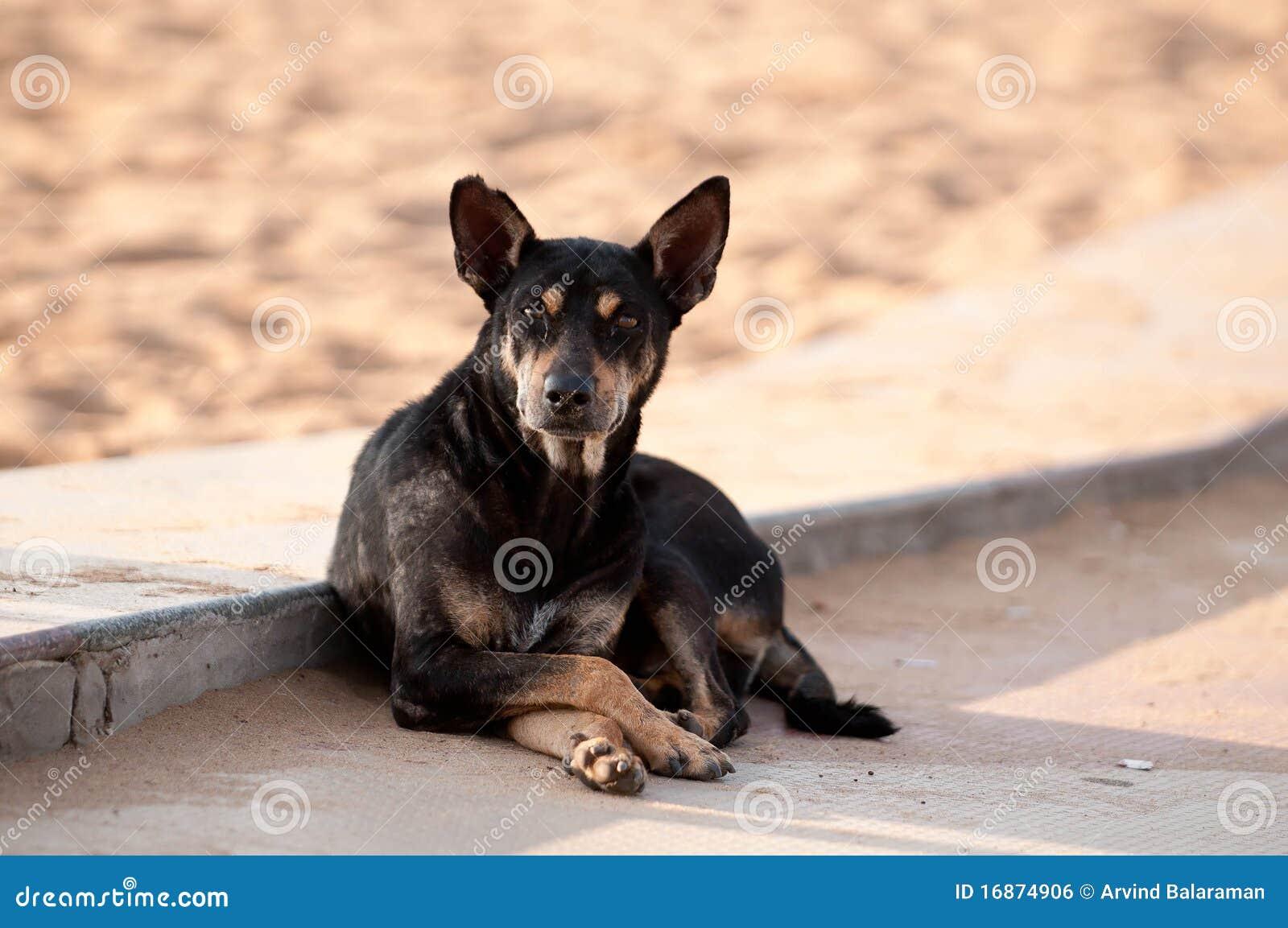 Cão disperso