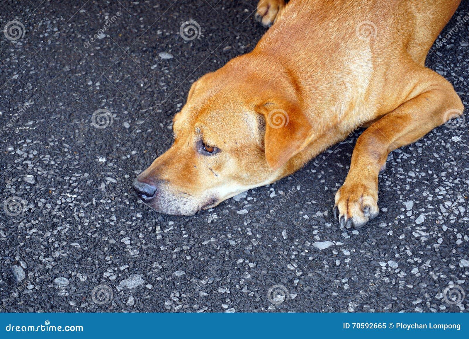 Cão disperso de Brown