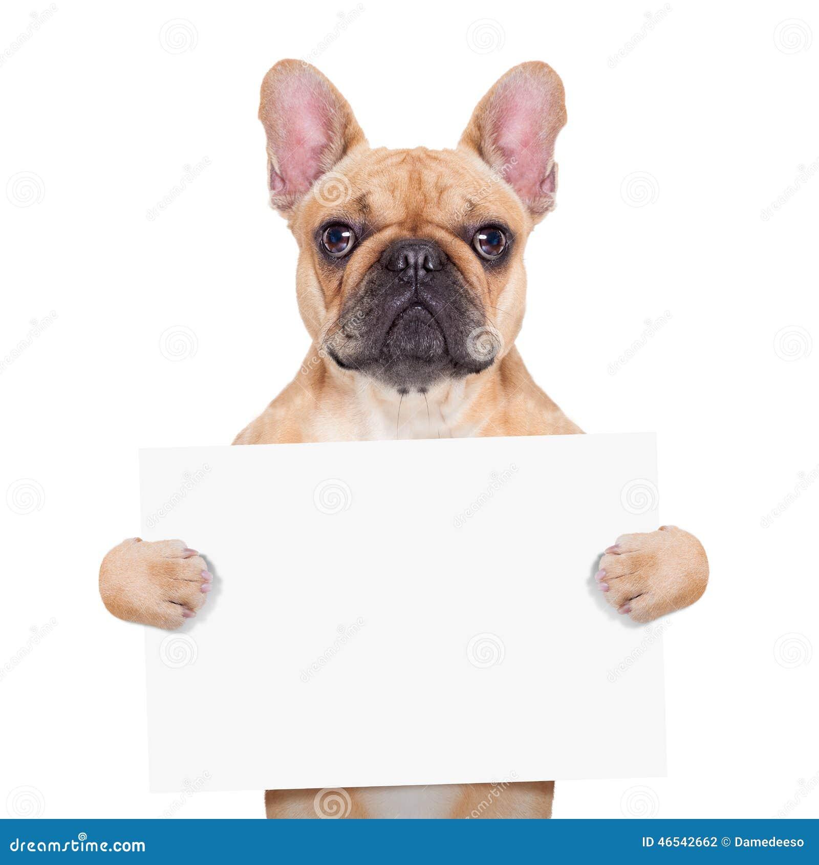 Cão do cartaz da bandeira