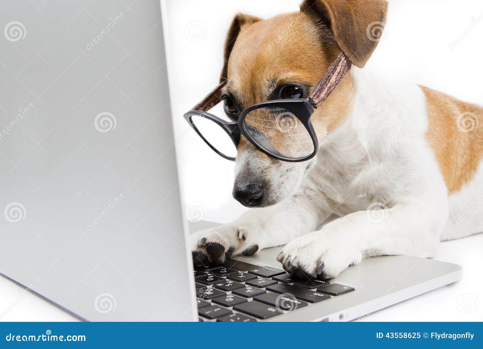 Cão do computador