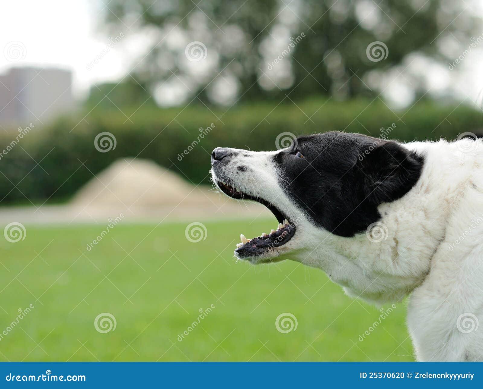 Cão do descascamento