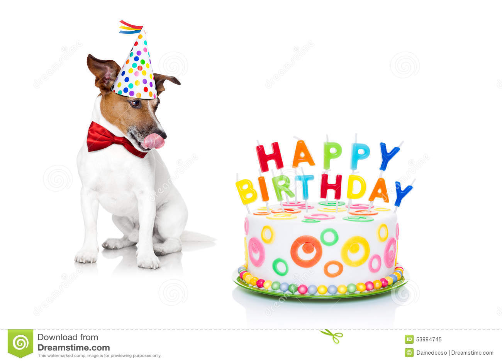 Cão do feliz aniversario