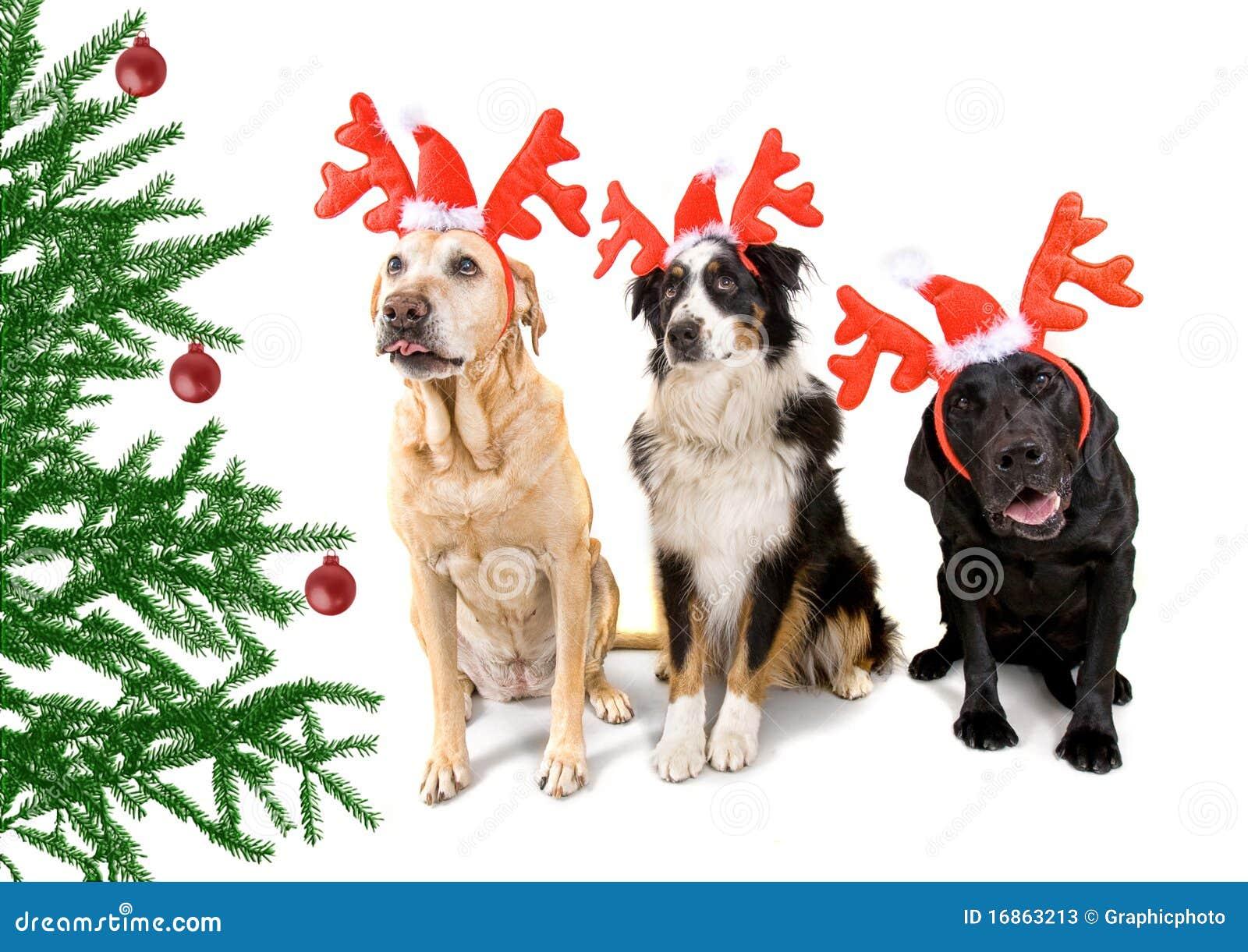 Cão do Natal