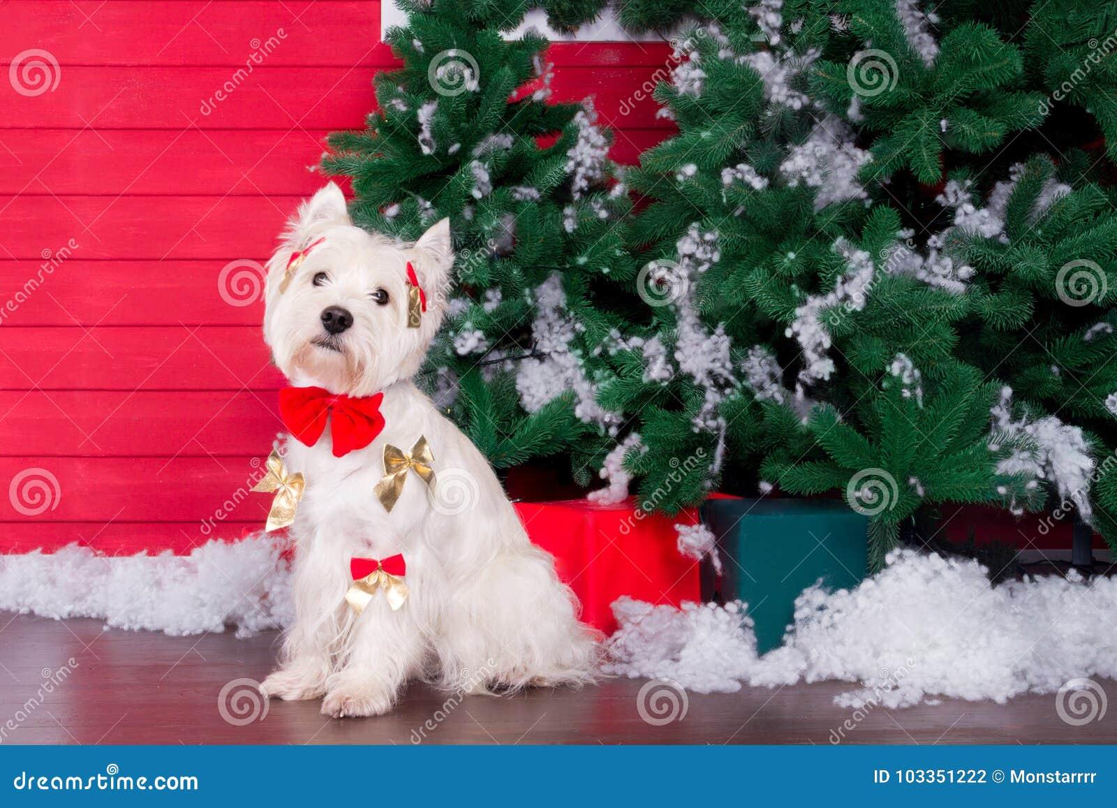 Cão do Natal como o símbolo do ano novo