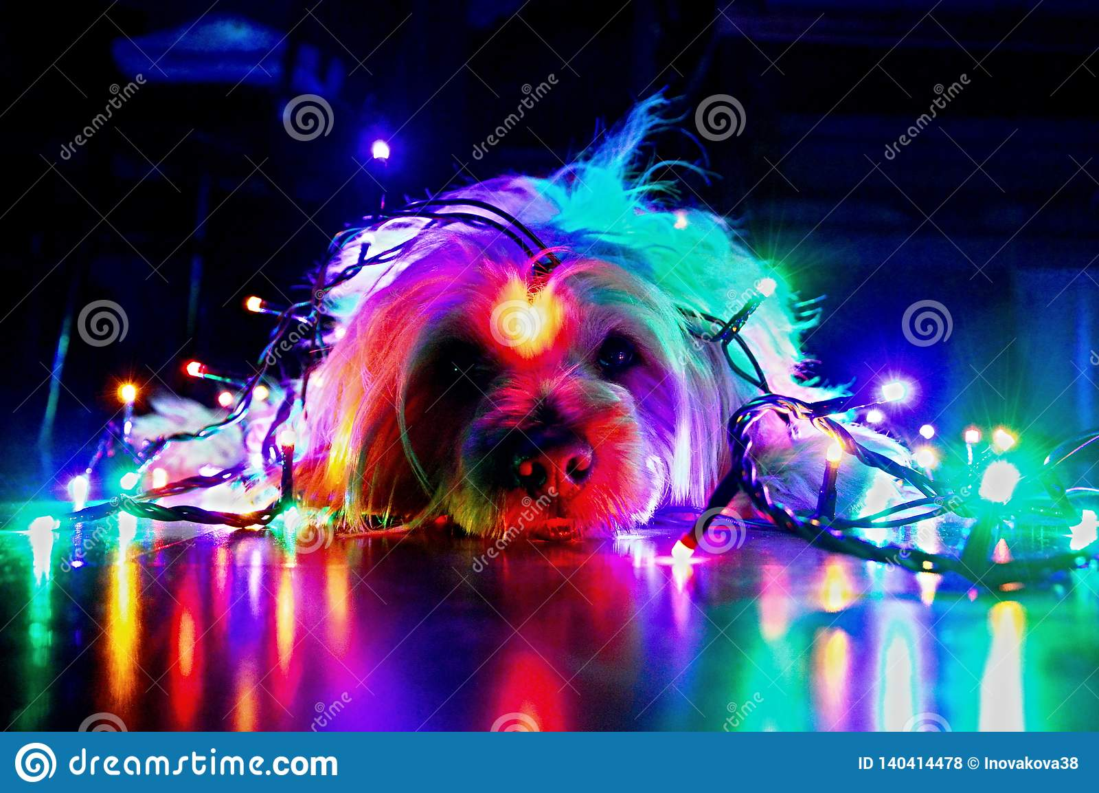 Cão do Natal feliz e luzes coloridas