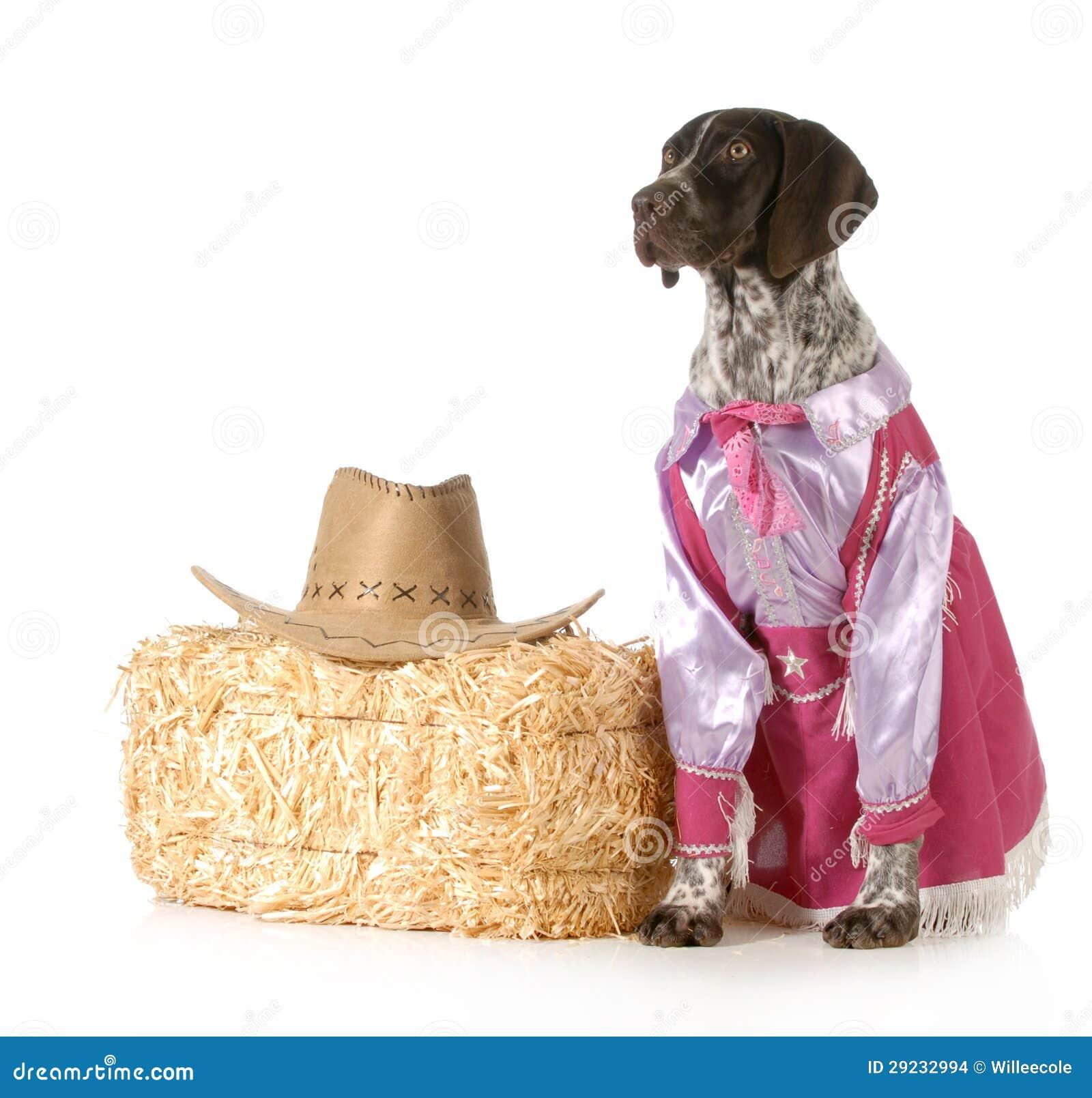 Download Cão do país foto de stock. Imagem de fundo, cão, engraçado - 29232994
