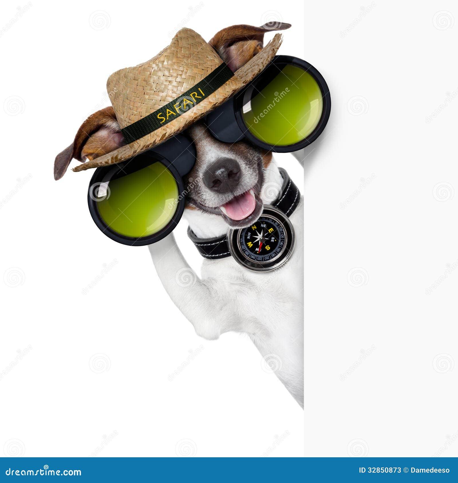 Cão do safari
