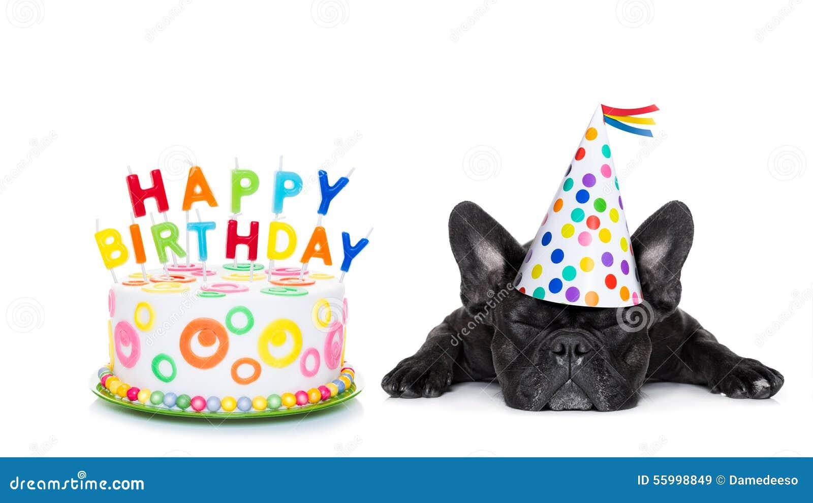 Cão do sono do feliz aniversario