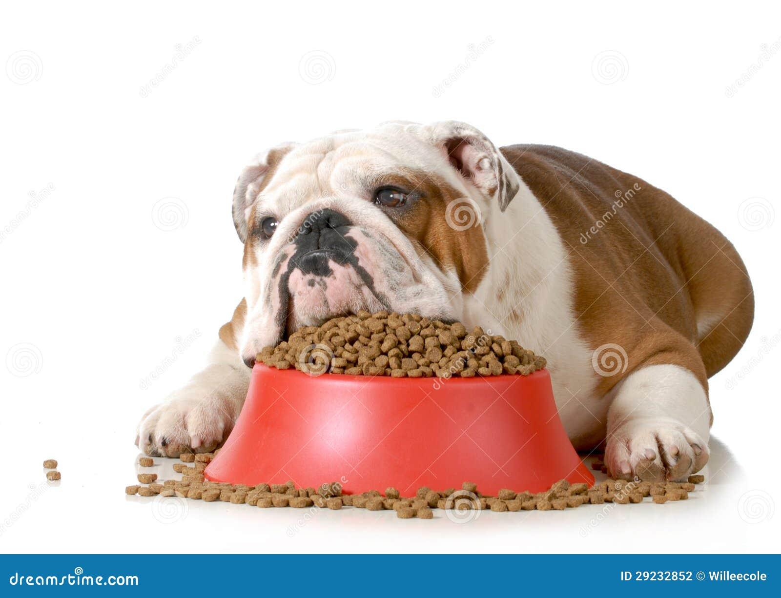 Download Cão doente foto de stock. Imagem de inglês, cuidado, isolado - 29232852