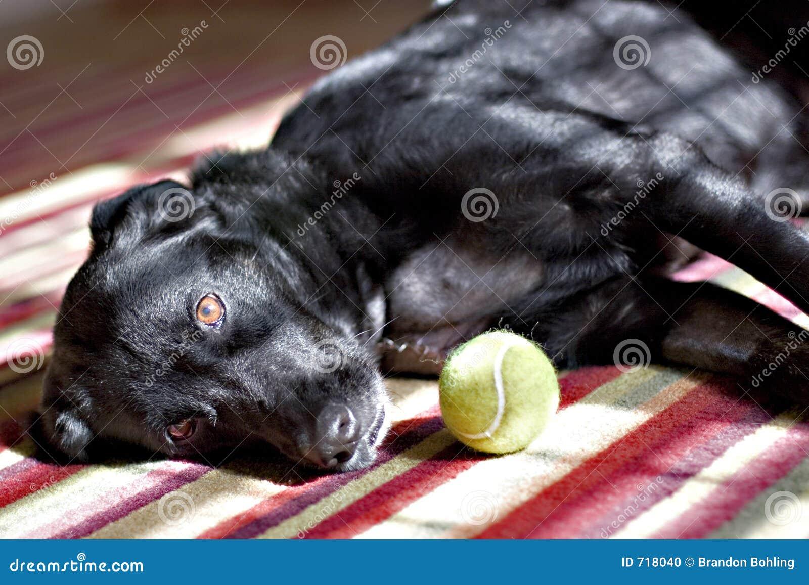 Cão e esfera